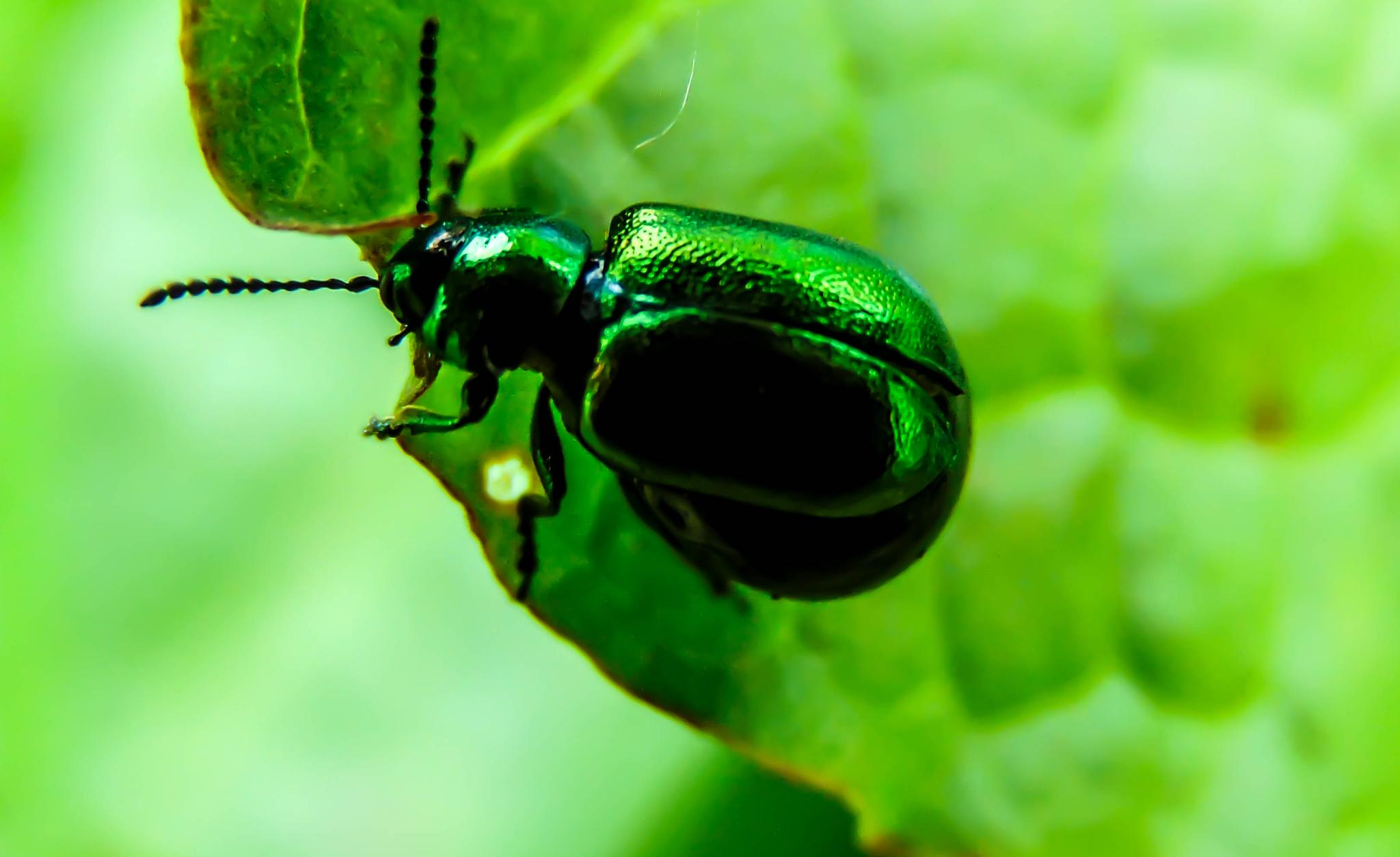 Hungry Beetle by Andrew H
