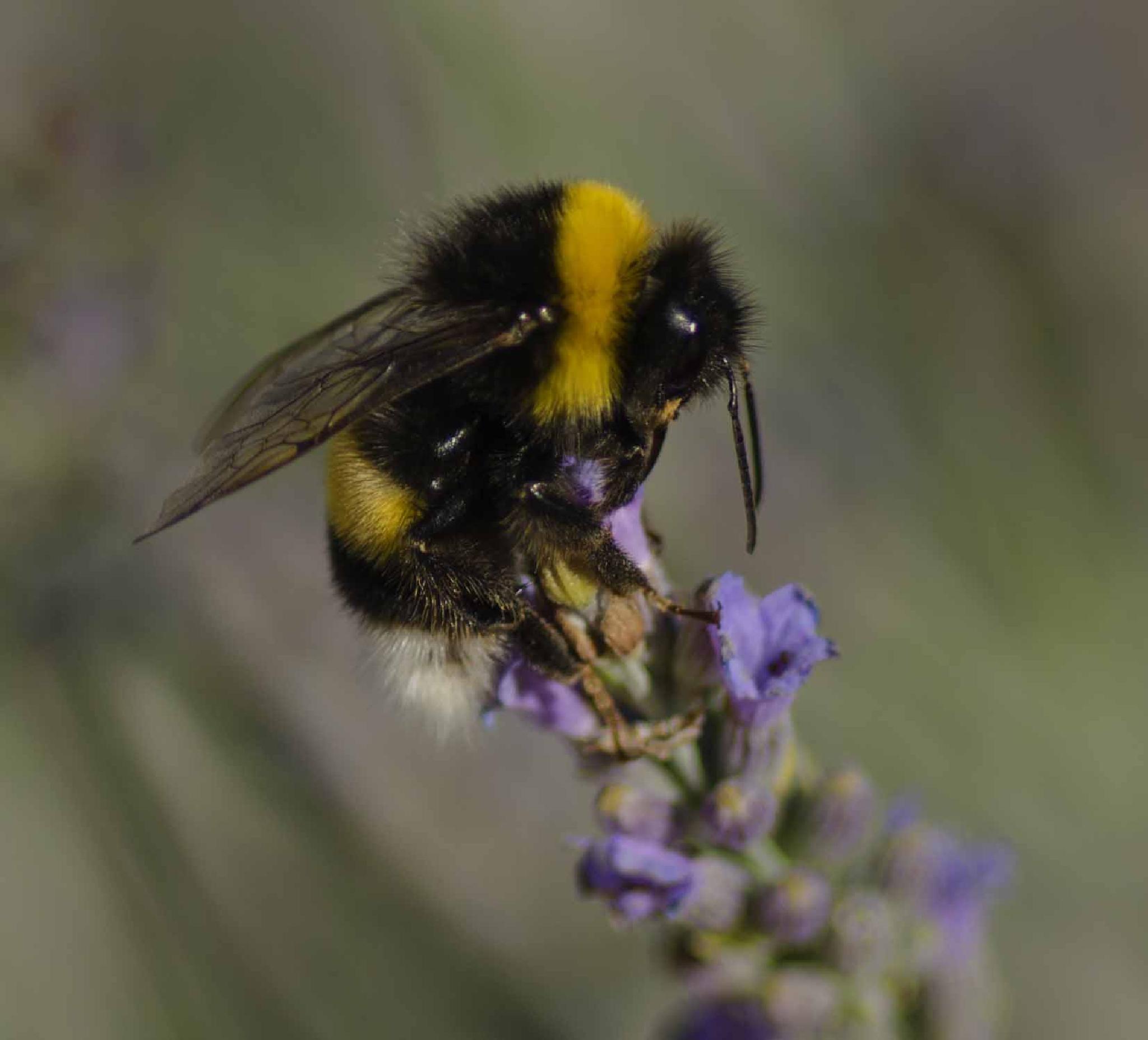 Bee landing to get nextar by nnpstom