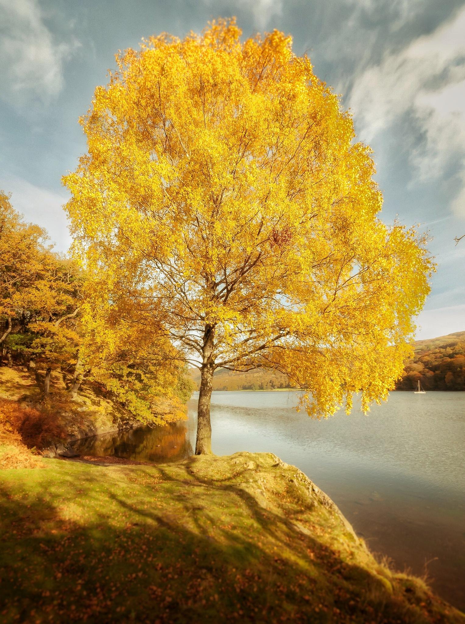 Autumn Colour by grahamjowett