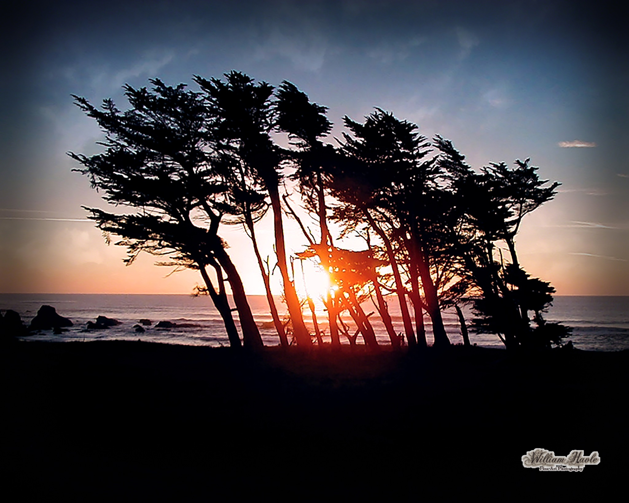 Fort Bragg Sunset in the Trees by Bill Havle