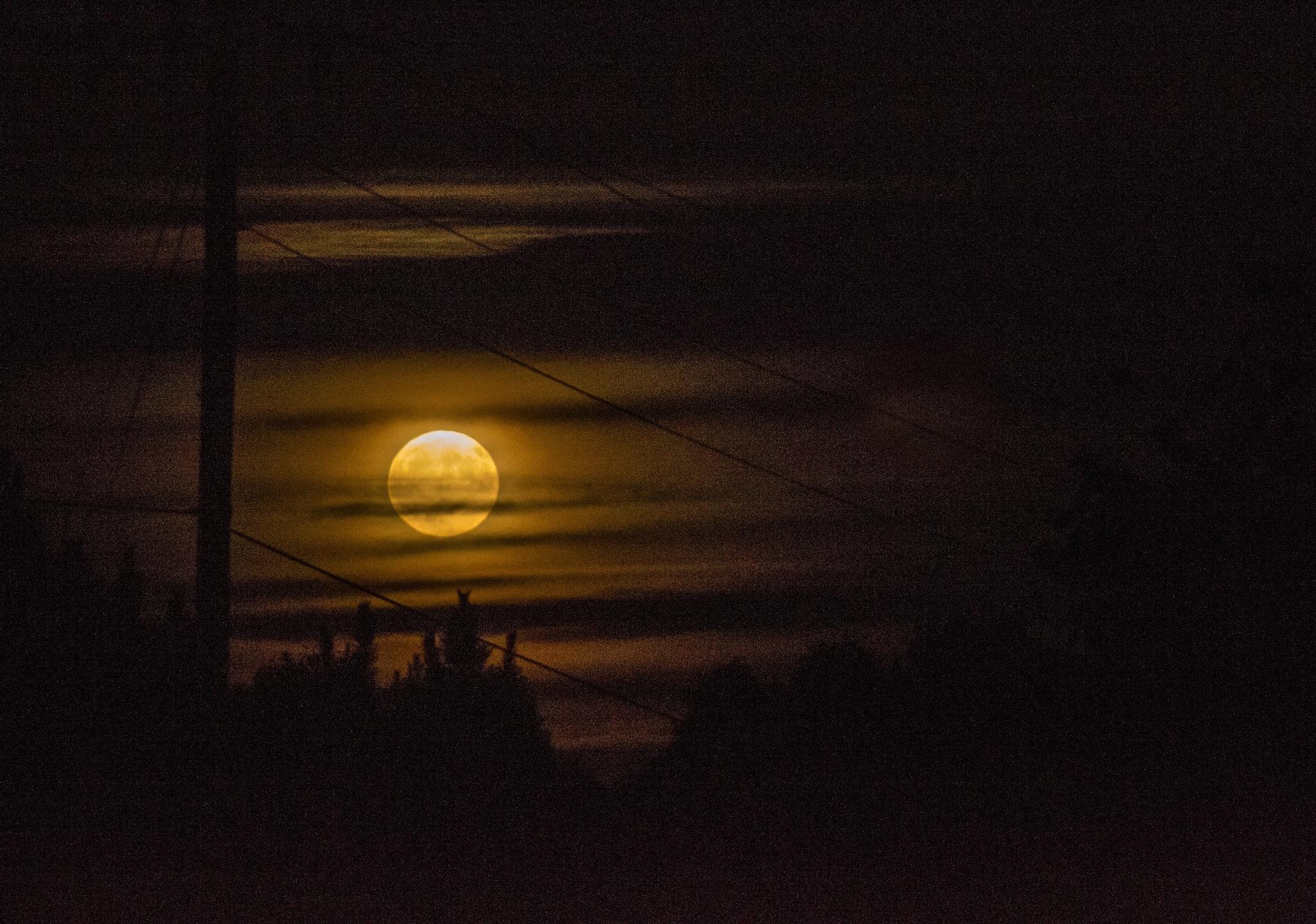 Harvest Moon by Jamie Critzer