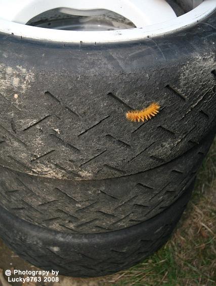 Tyre inspections 2008 by Attila Erdei