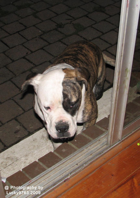 Can I come in? 2009 by Attila Erdei