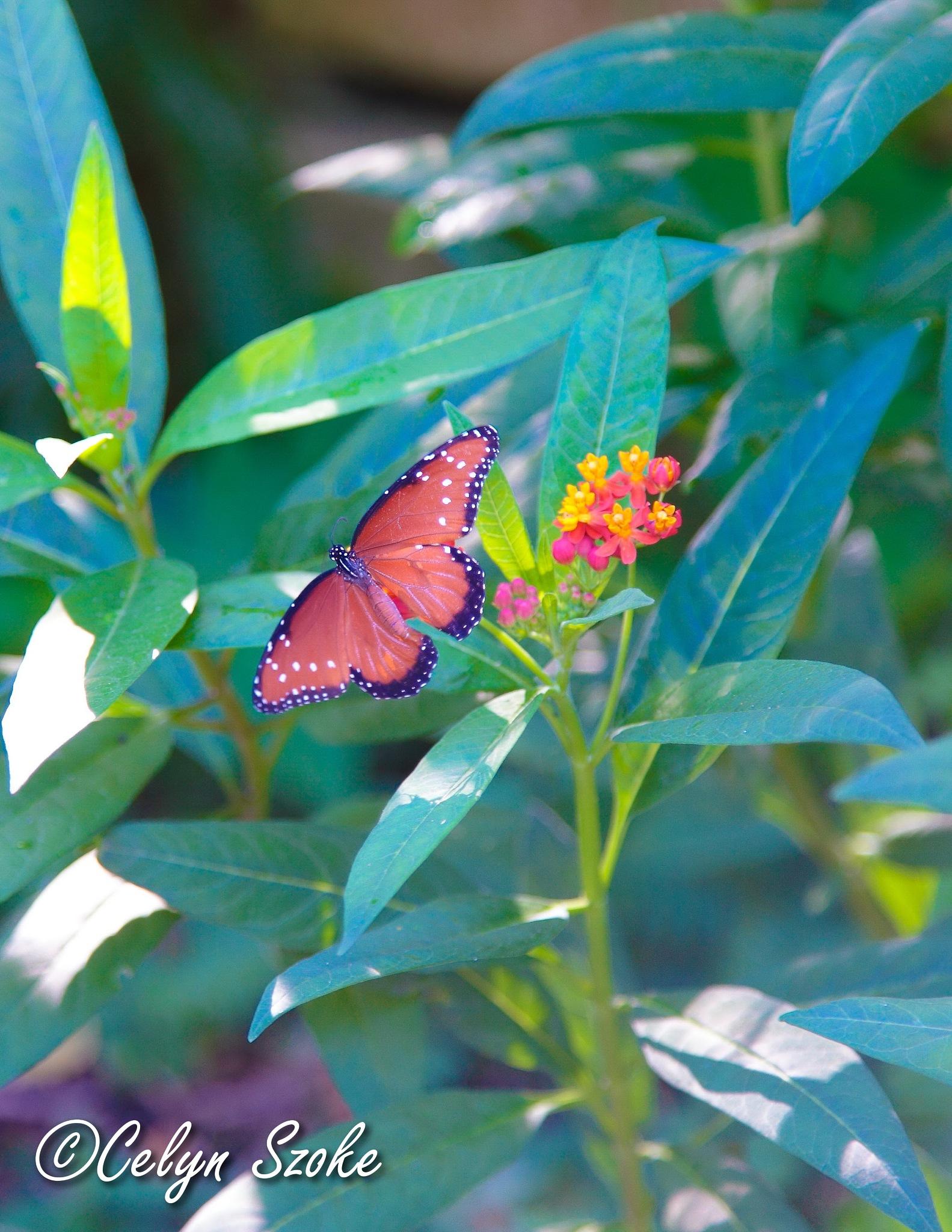 botanical butterfly by Celyn Szoke