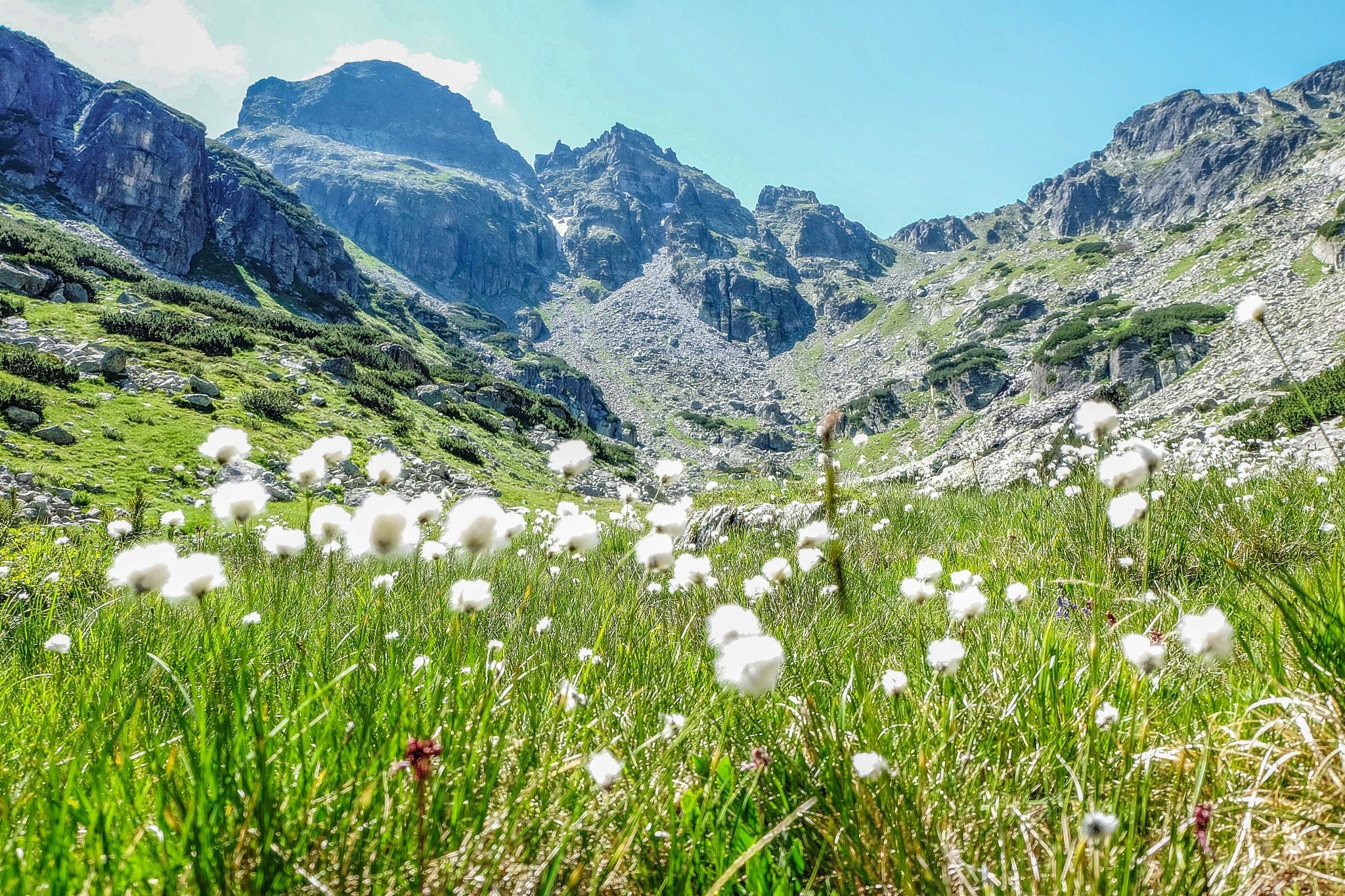 Sumer in Rila mountain by Hristo Dechev