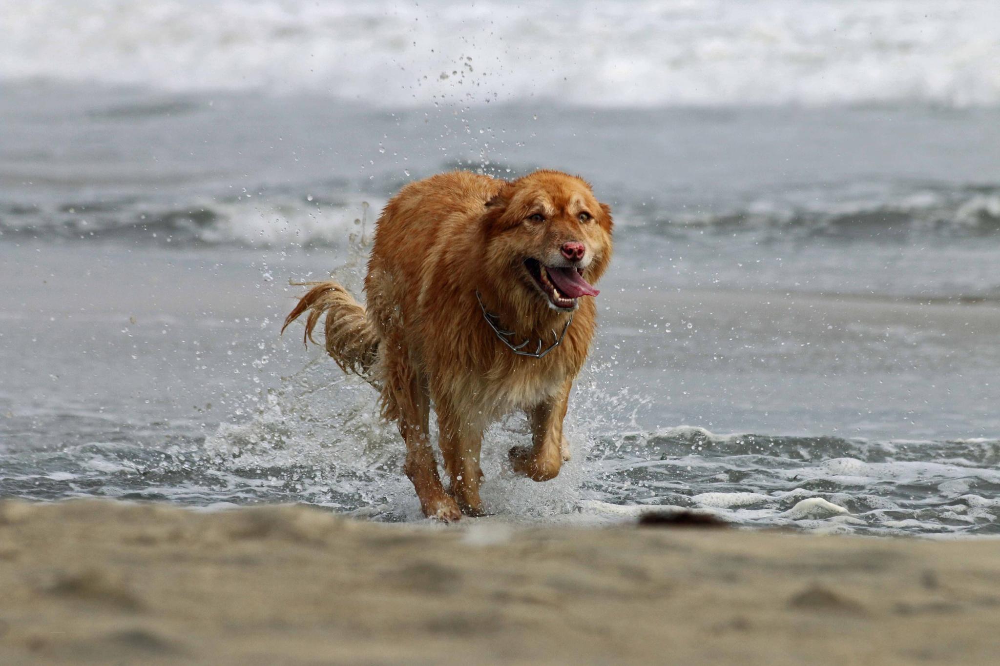 Sea dog by John_Ediger