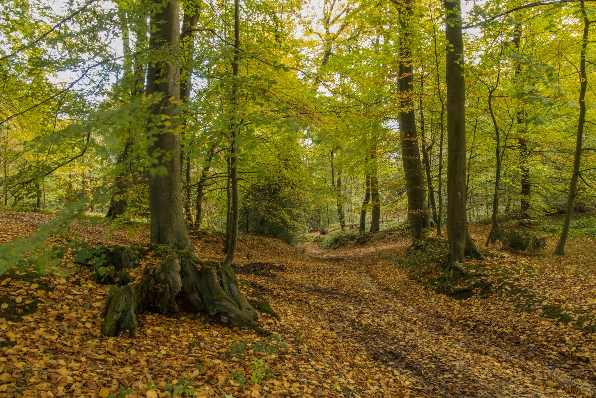 Bottom wood Chiltern hills by Jim Hellier