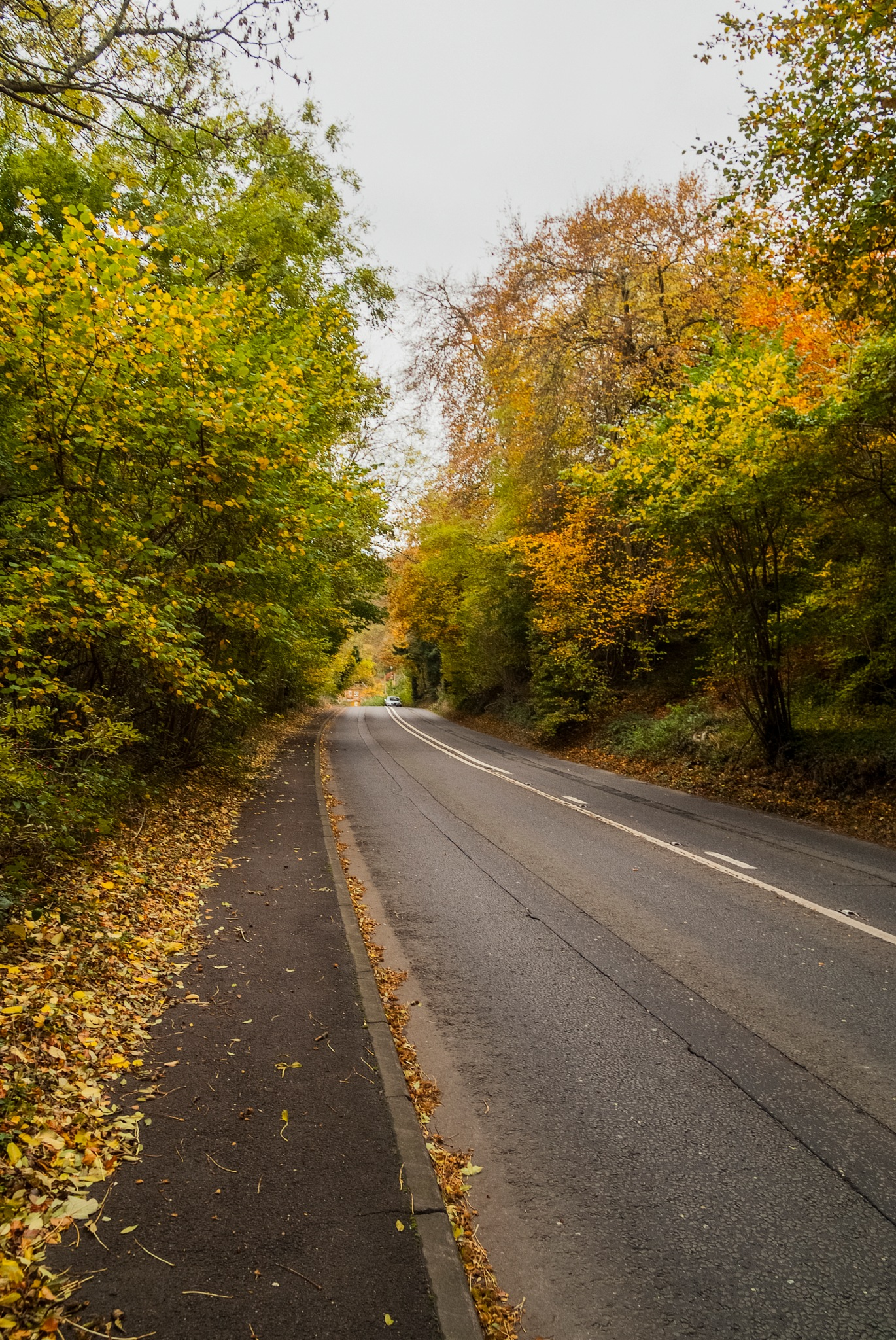 Autumn colours  by Jim Hellier
