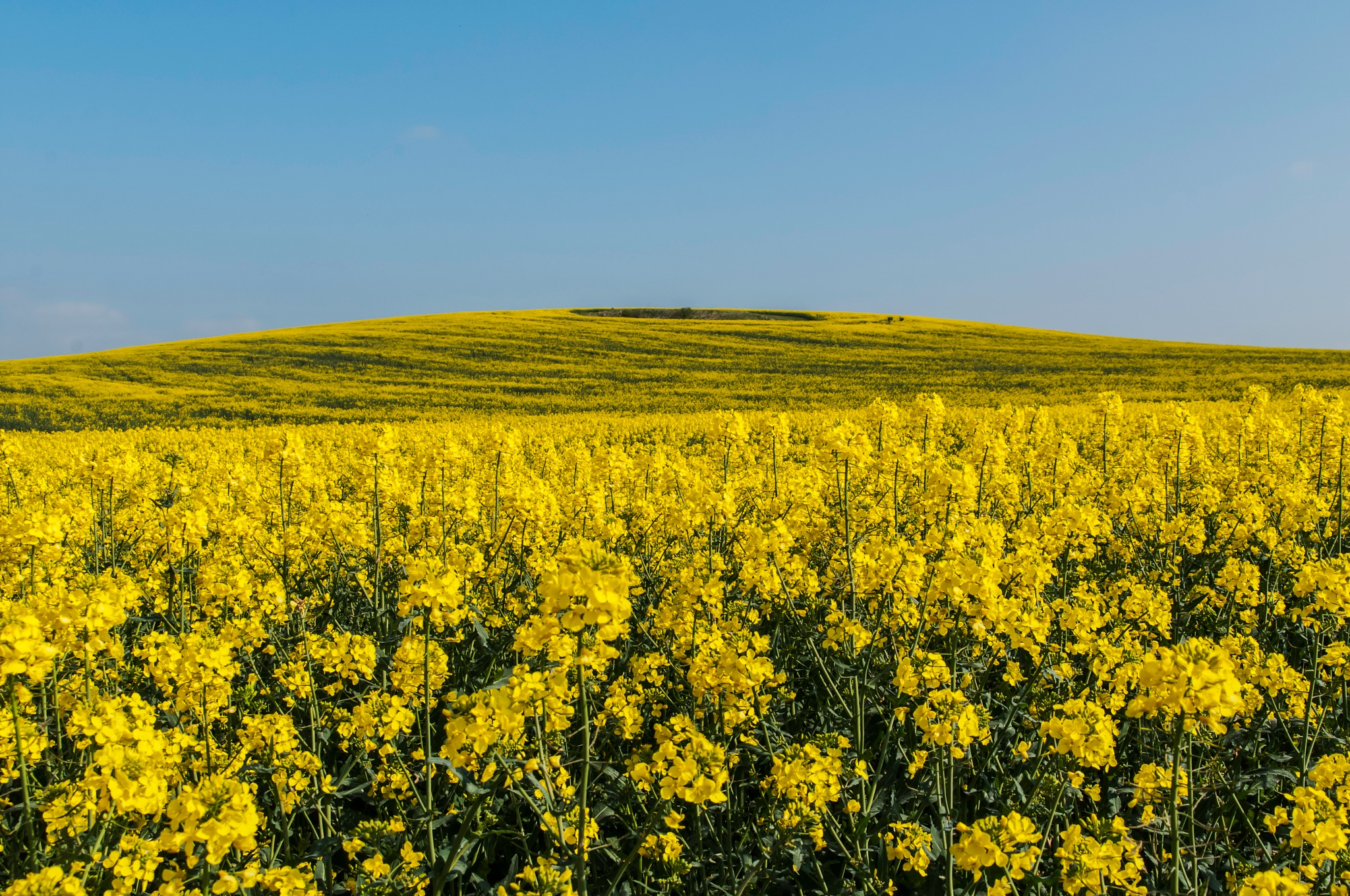 Yellow by Jim Hellier