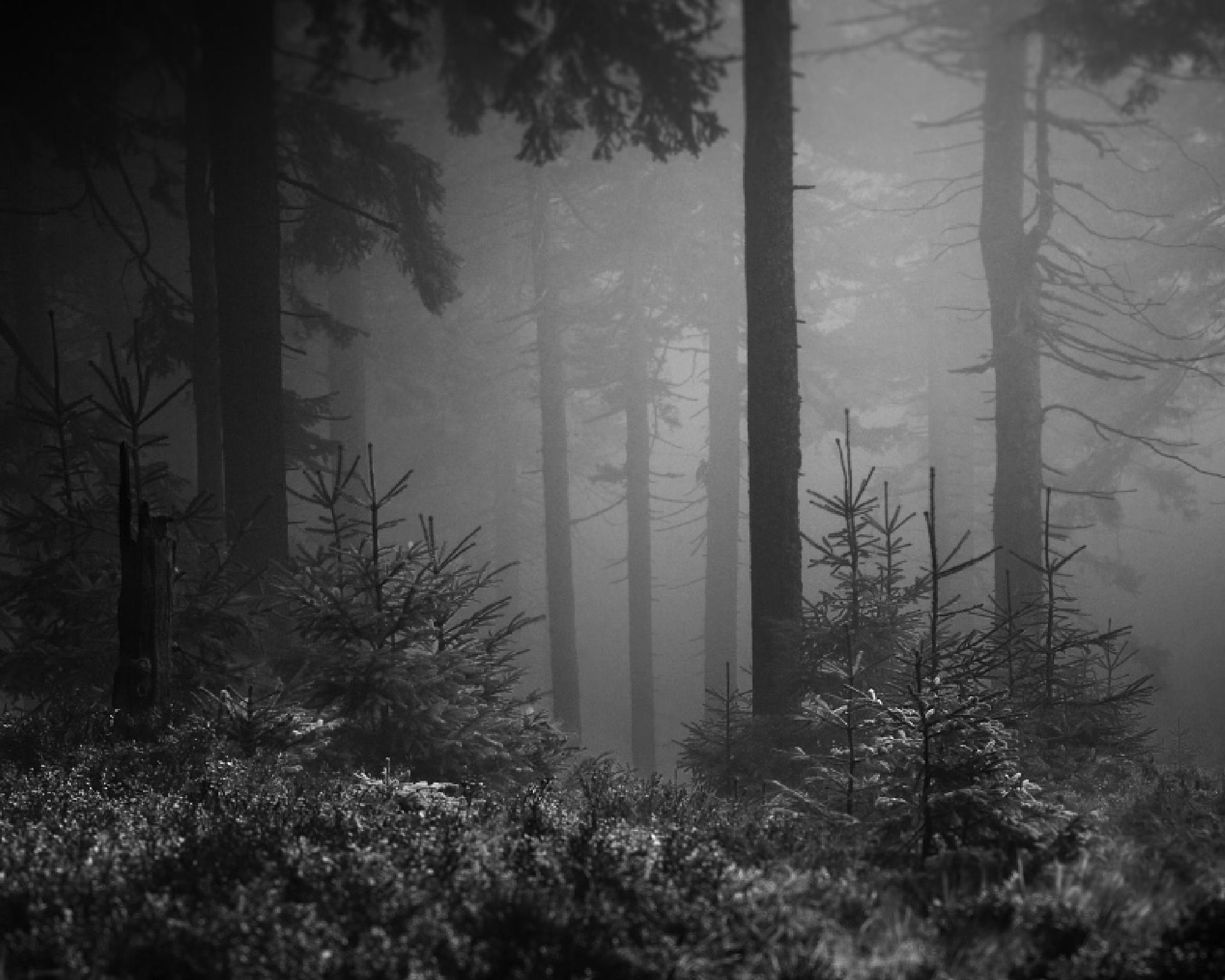 Photo in Nature #forest #mountain #mist #fog #nature #monochromatic