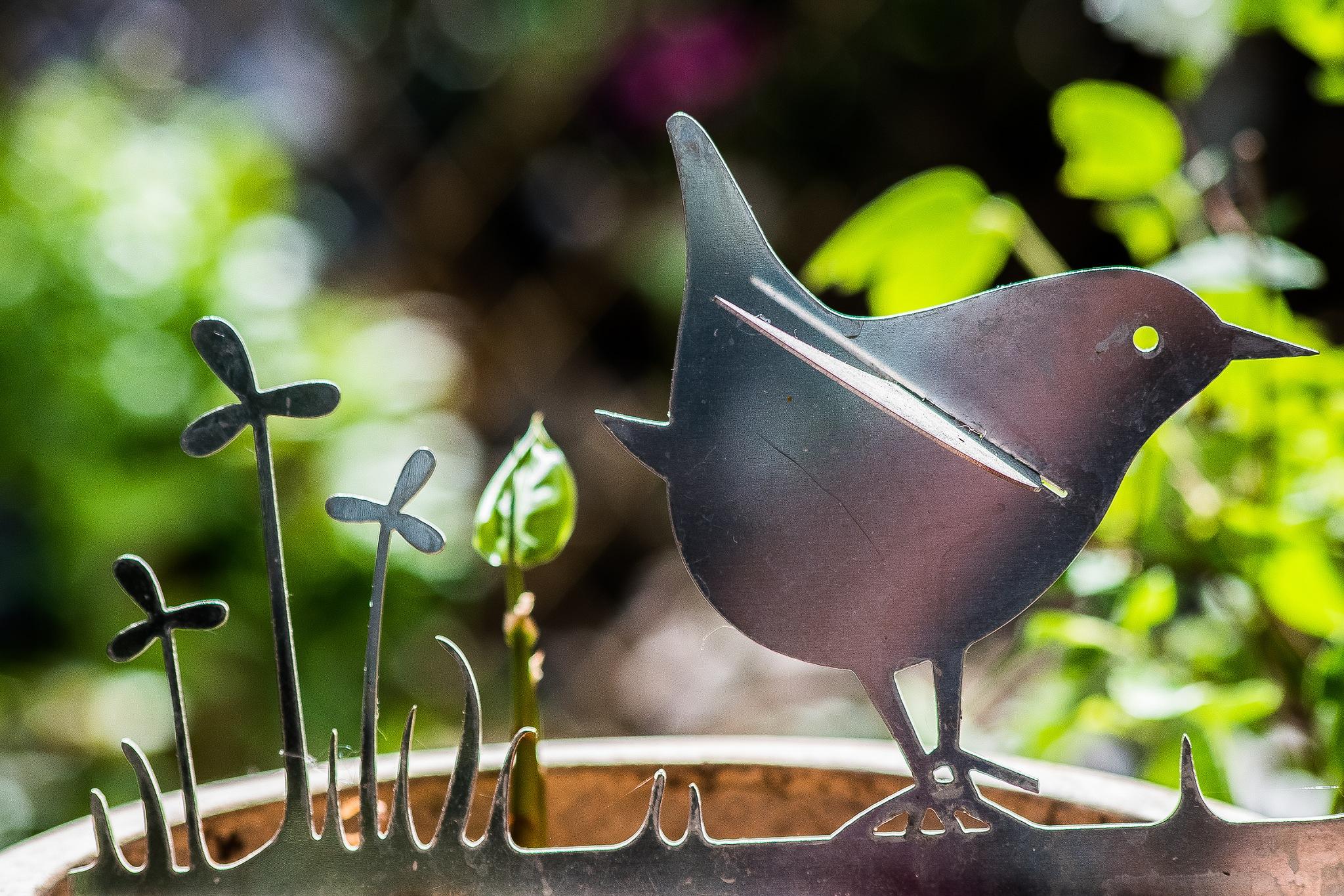 Watch The Birdie by madchickenwoman