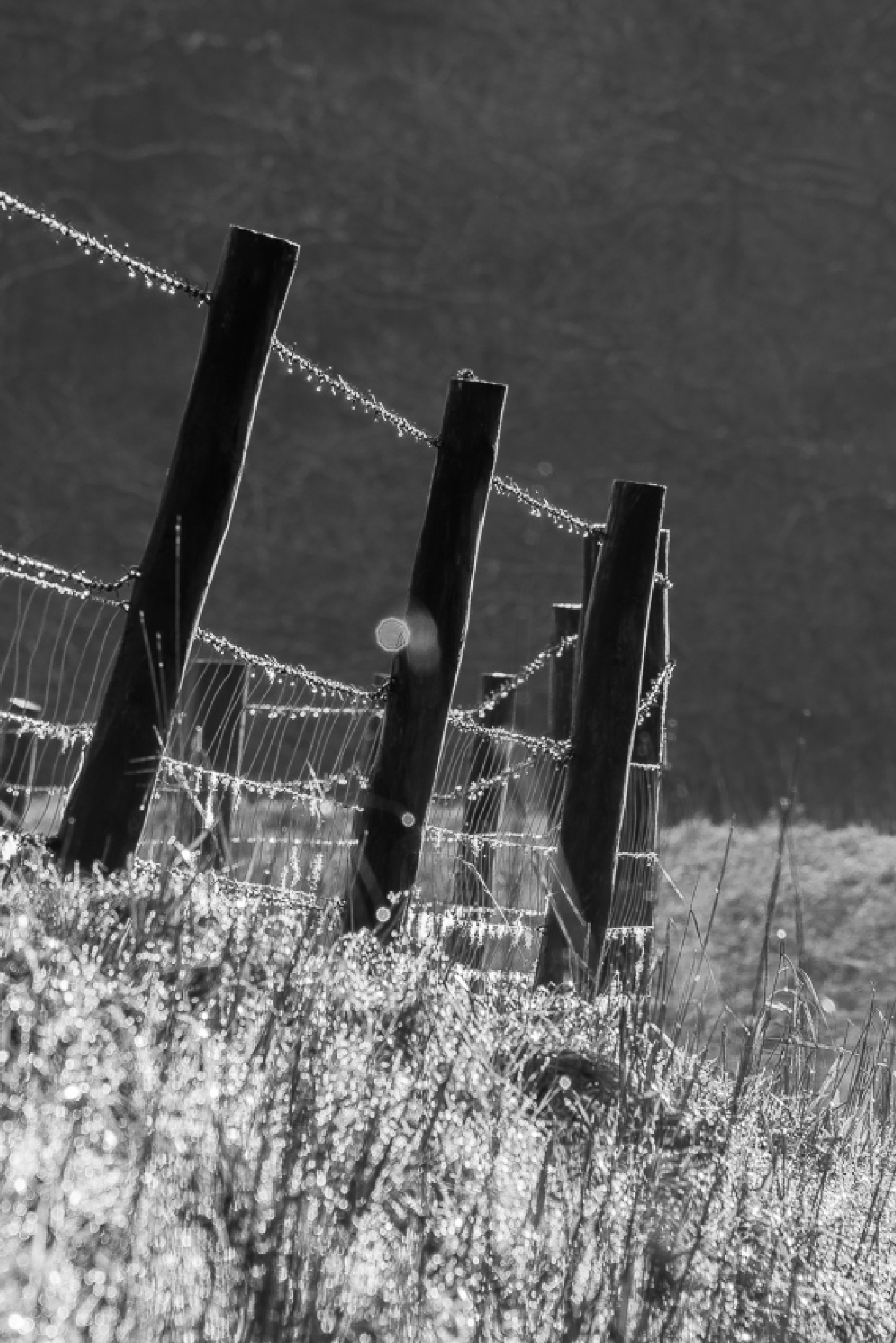 More Fence?  by madchickenwoman