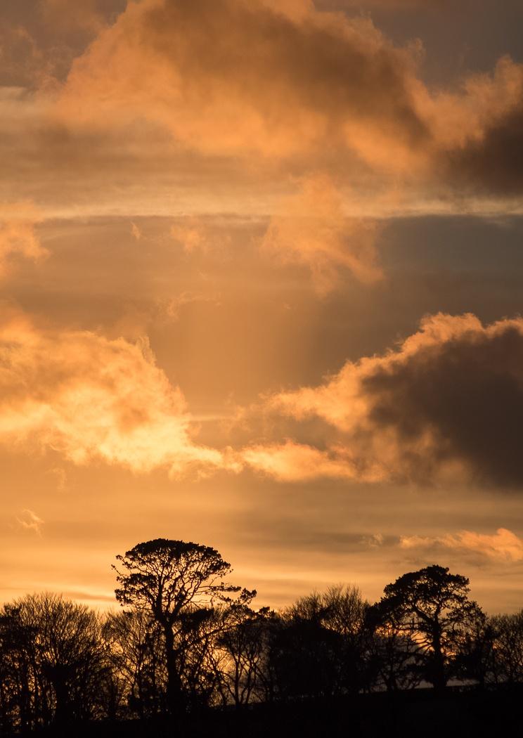 Golden Sunset portrait! by madchickenwoman