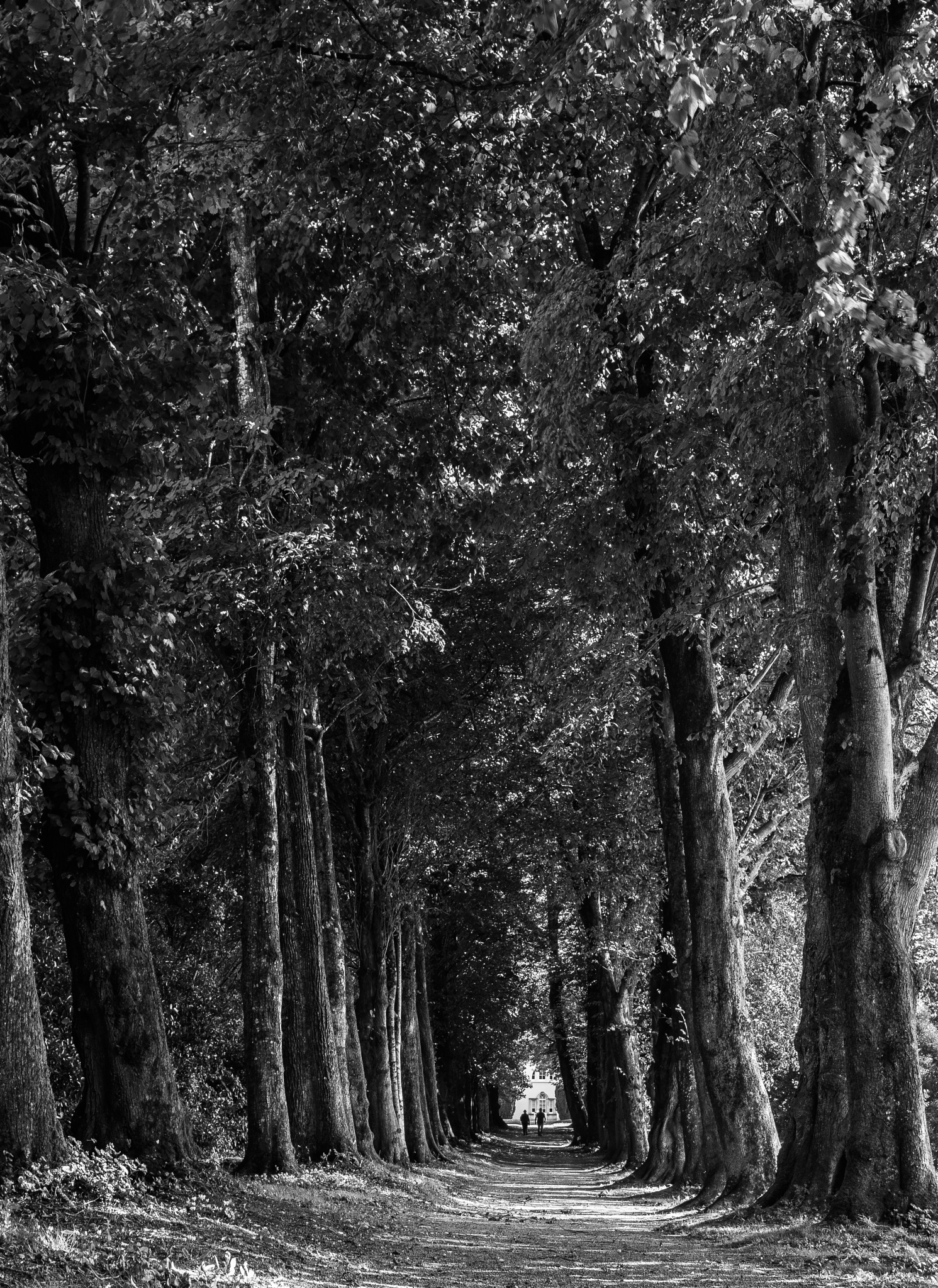 The Lime Avenue by madchickenwoman