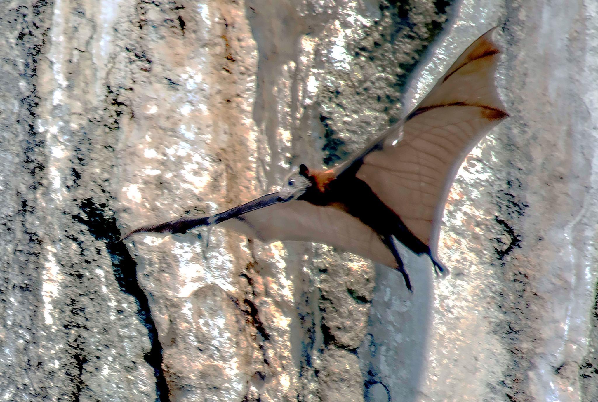 Bat by bo
