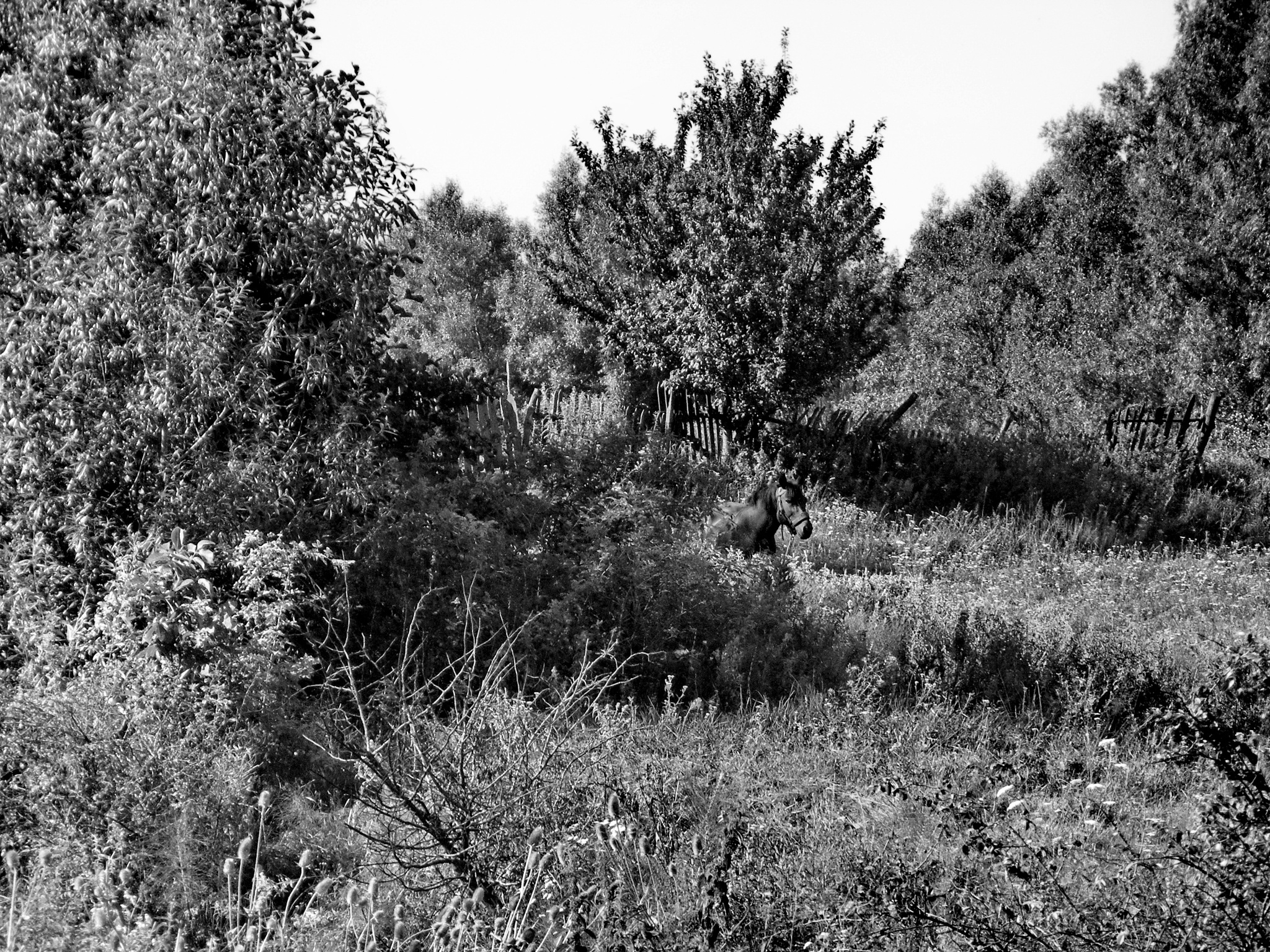 Hide and seek by Irina Carmen Brinza
