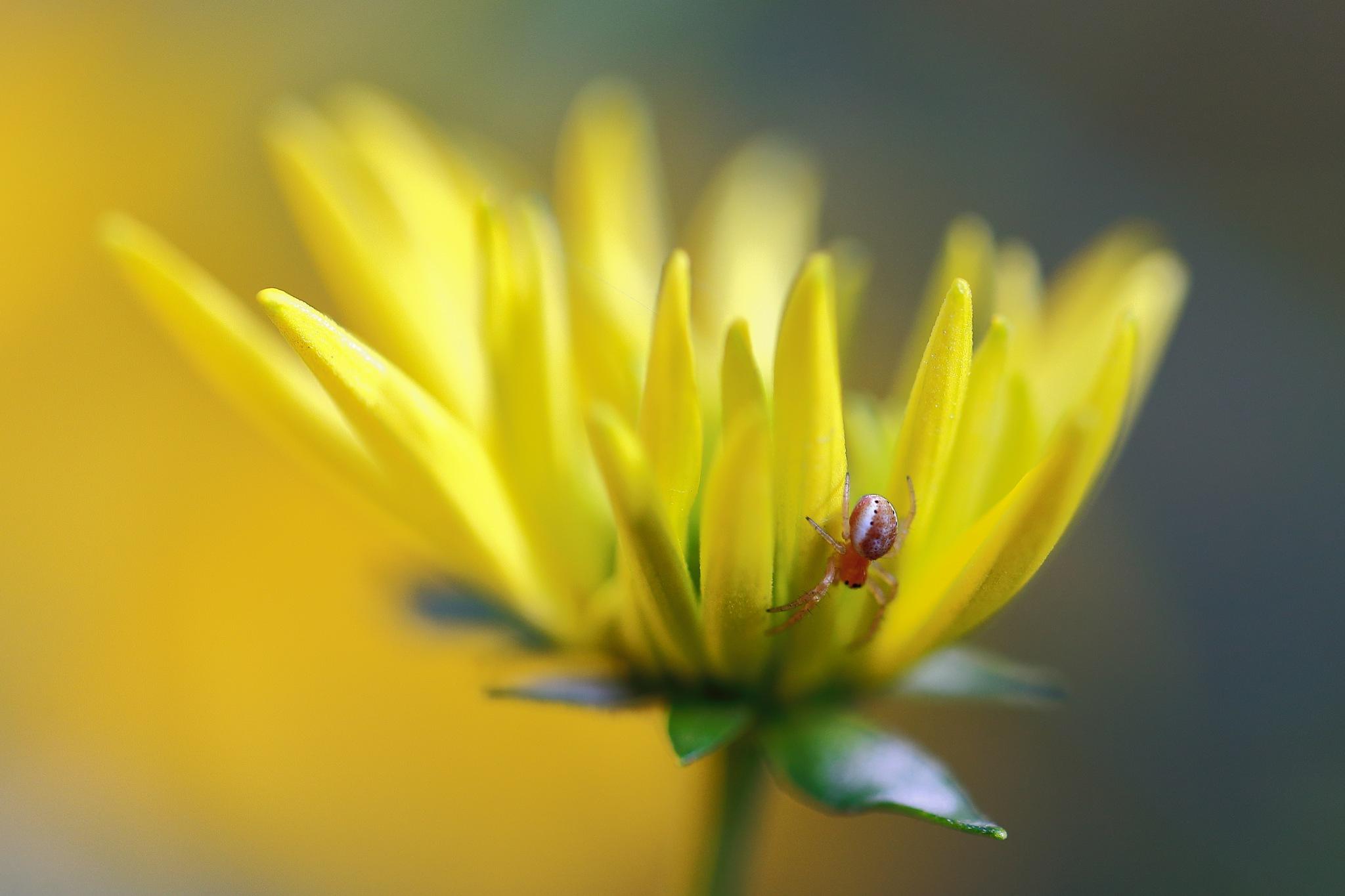 Autumn reflections by Eugene Yakovenko