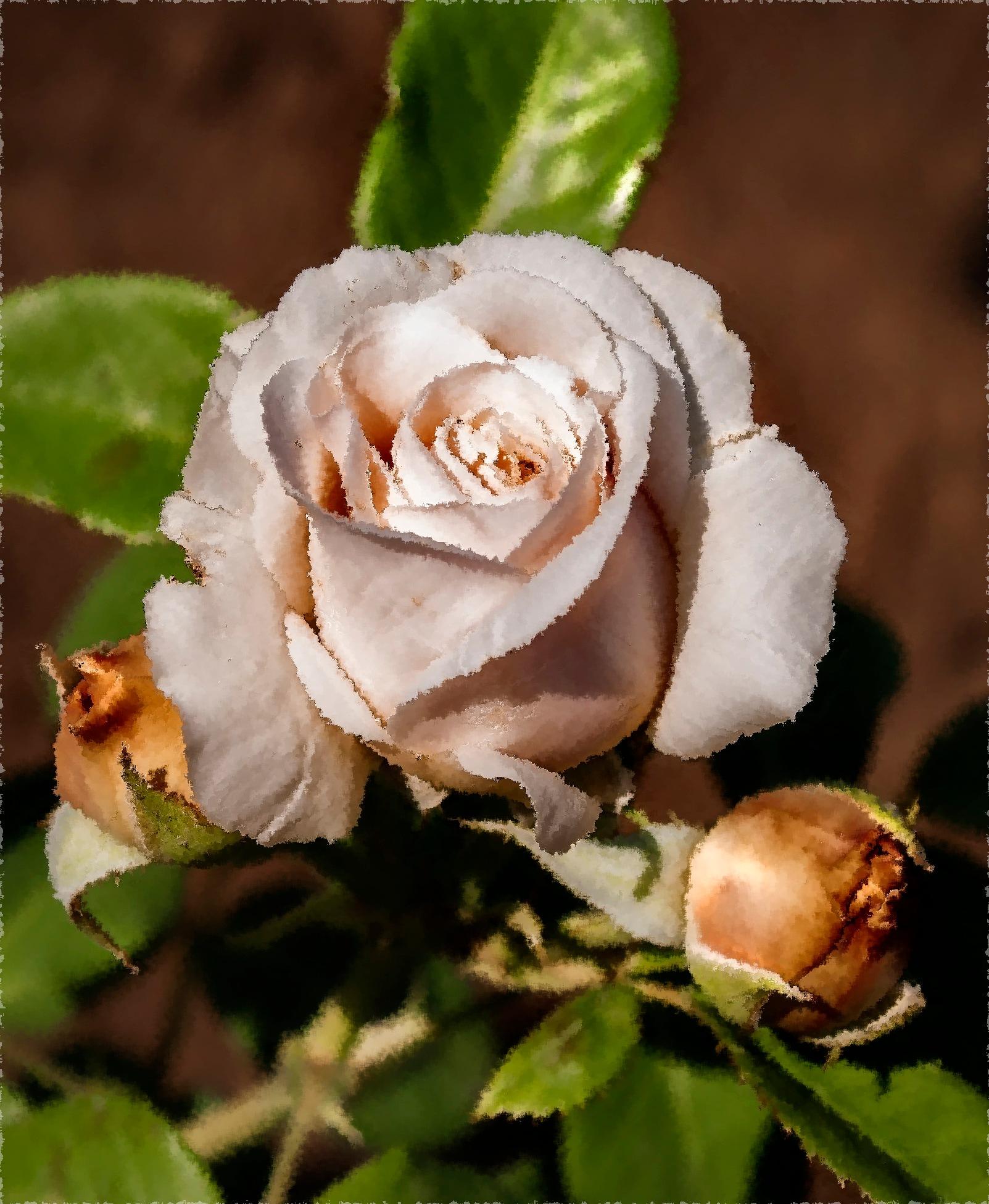 Роза.. by tatyanabelousova0996