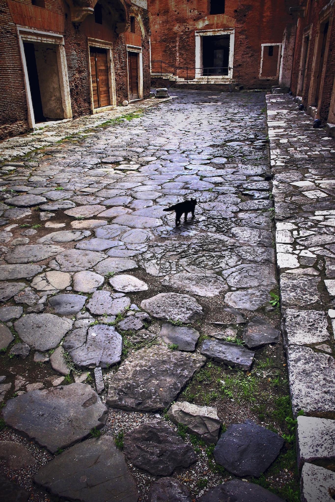 Trajan's Cat by Mark David