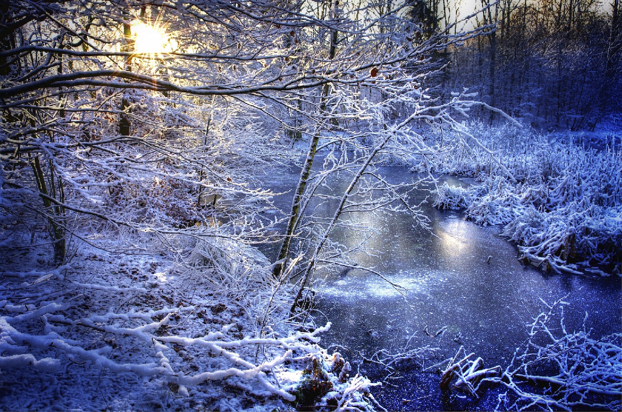Forest Snow by Mark David