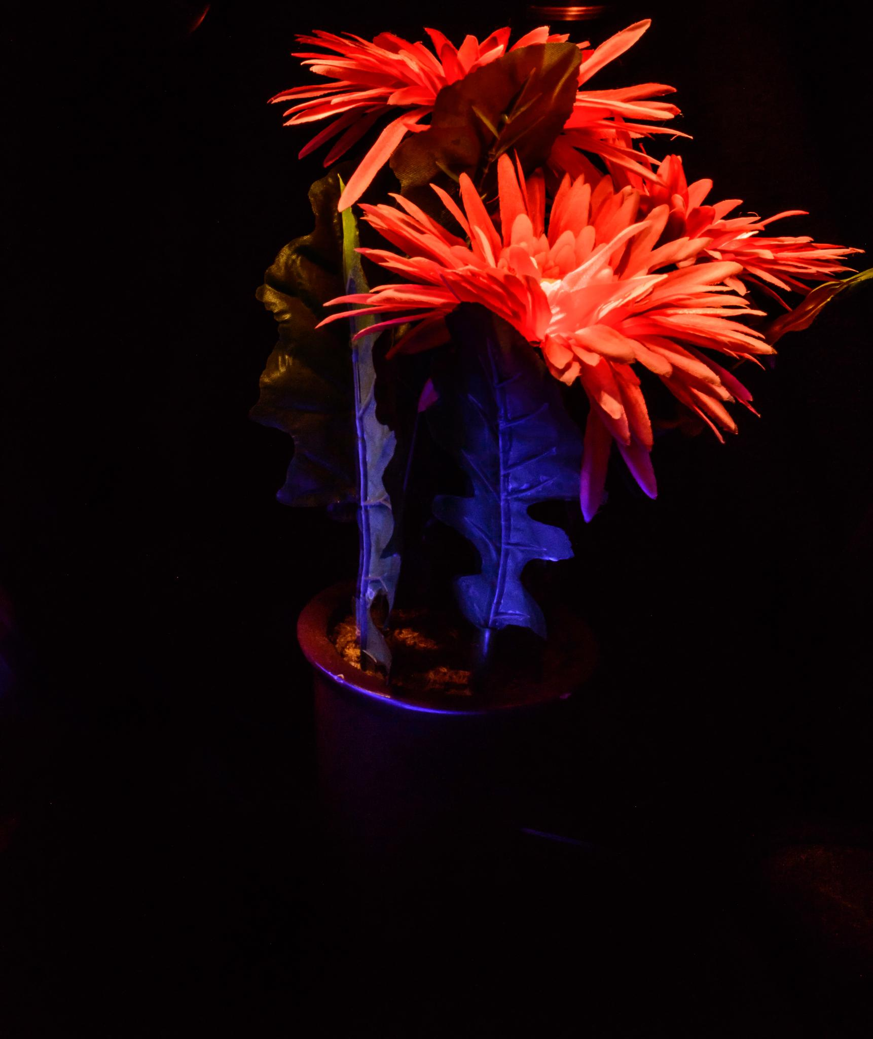 Colour me by Peter Glynn
