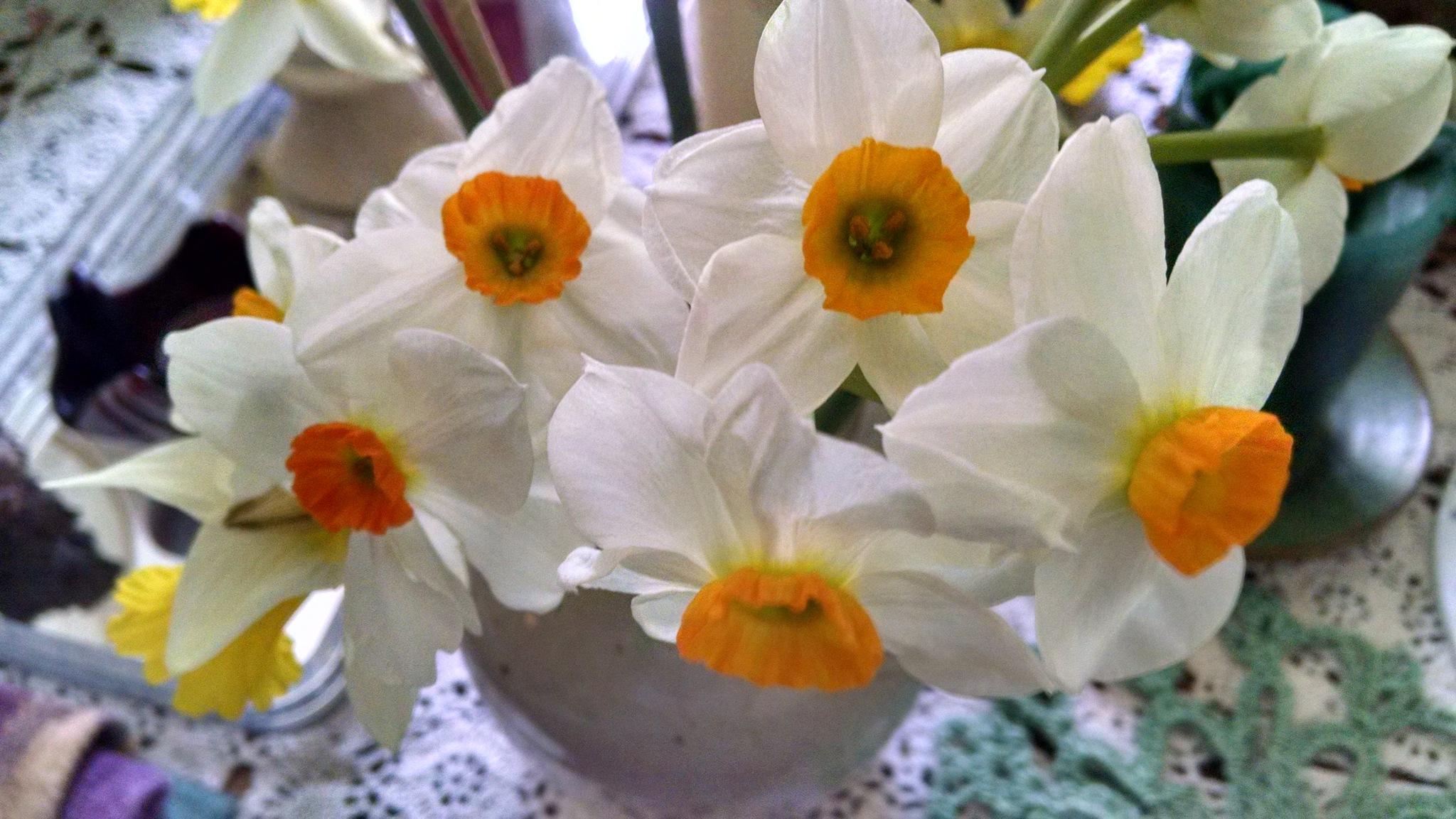 Celebrate Spring by Allen Nice-Webb