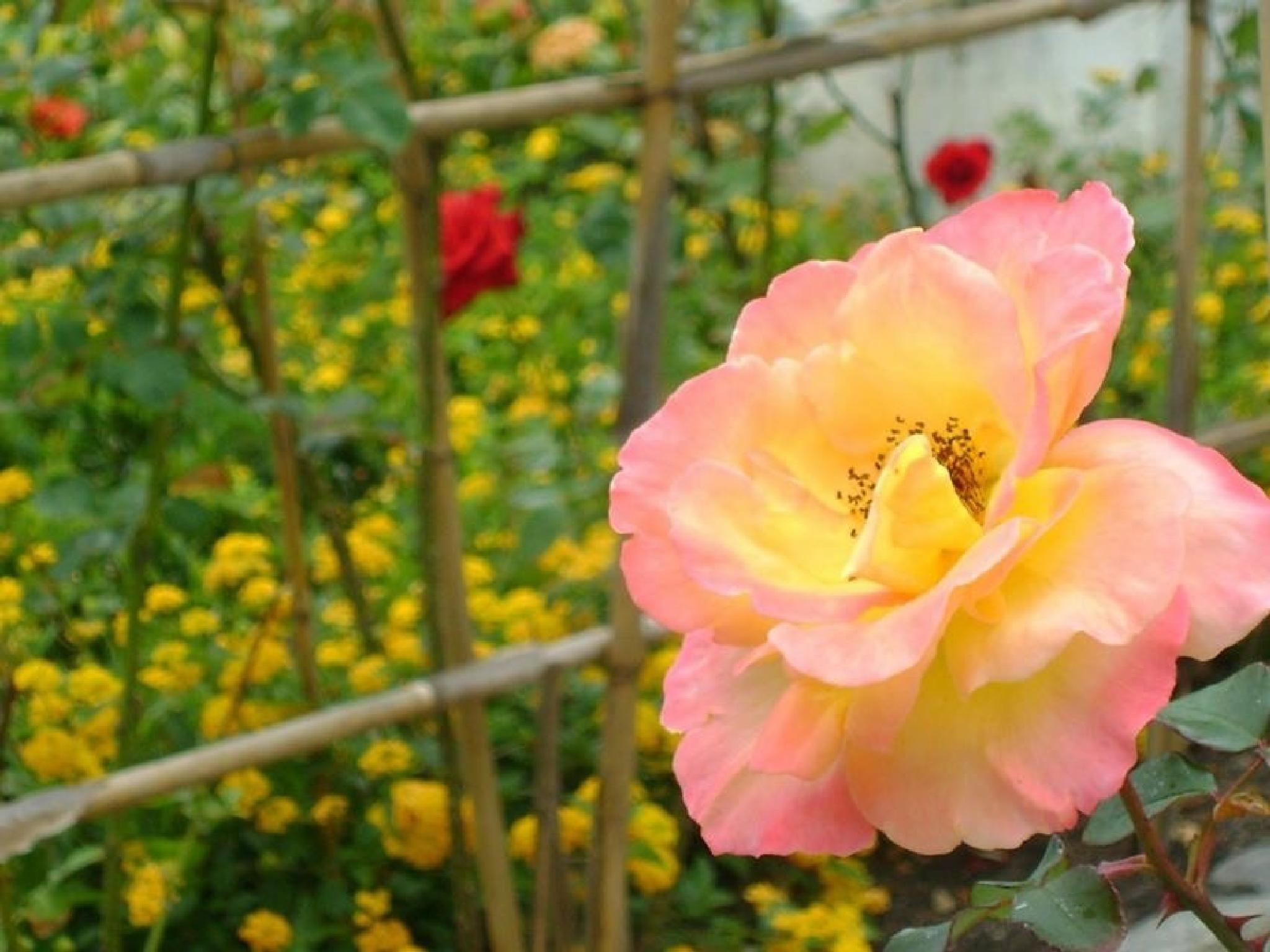 Photo in Nature #flowers fortedecopacabana