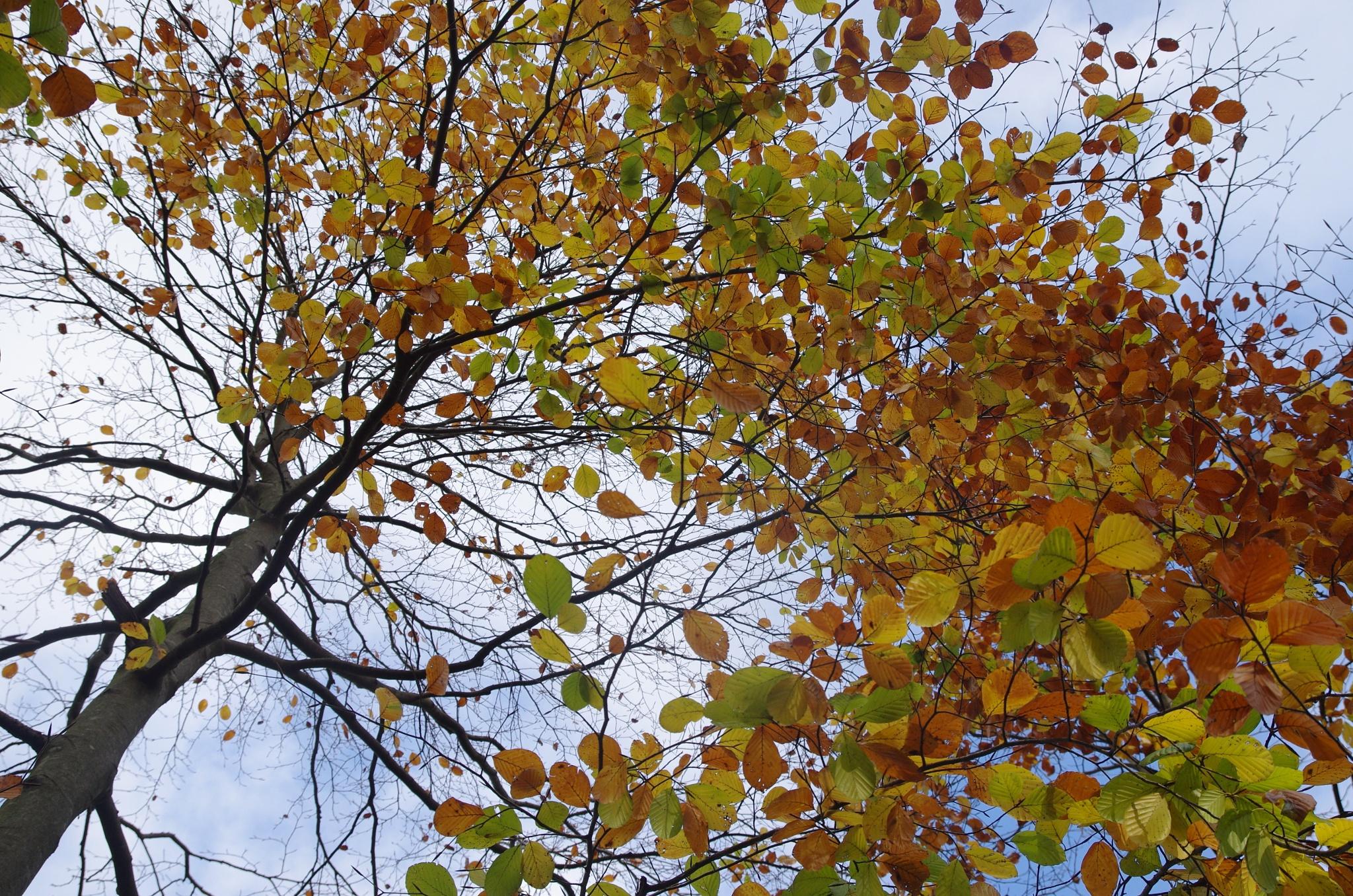 Tardor ,otoño,automne,autumn,autunno,..... by Joaquim Armengol