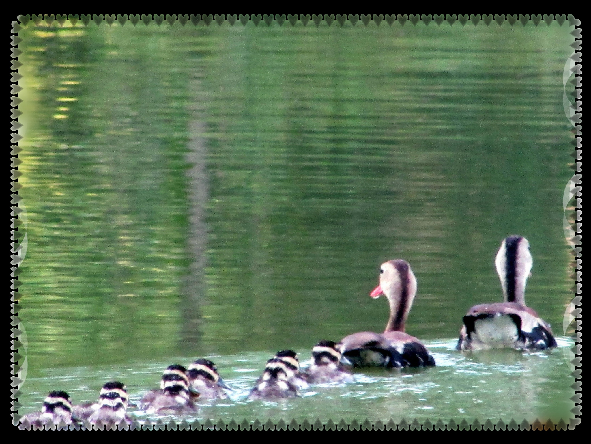 """""""Peaceful Family Gliding"""" by Bible Alive"""