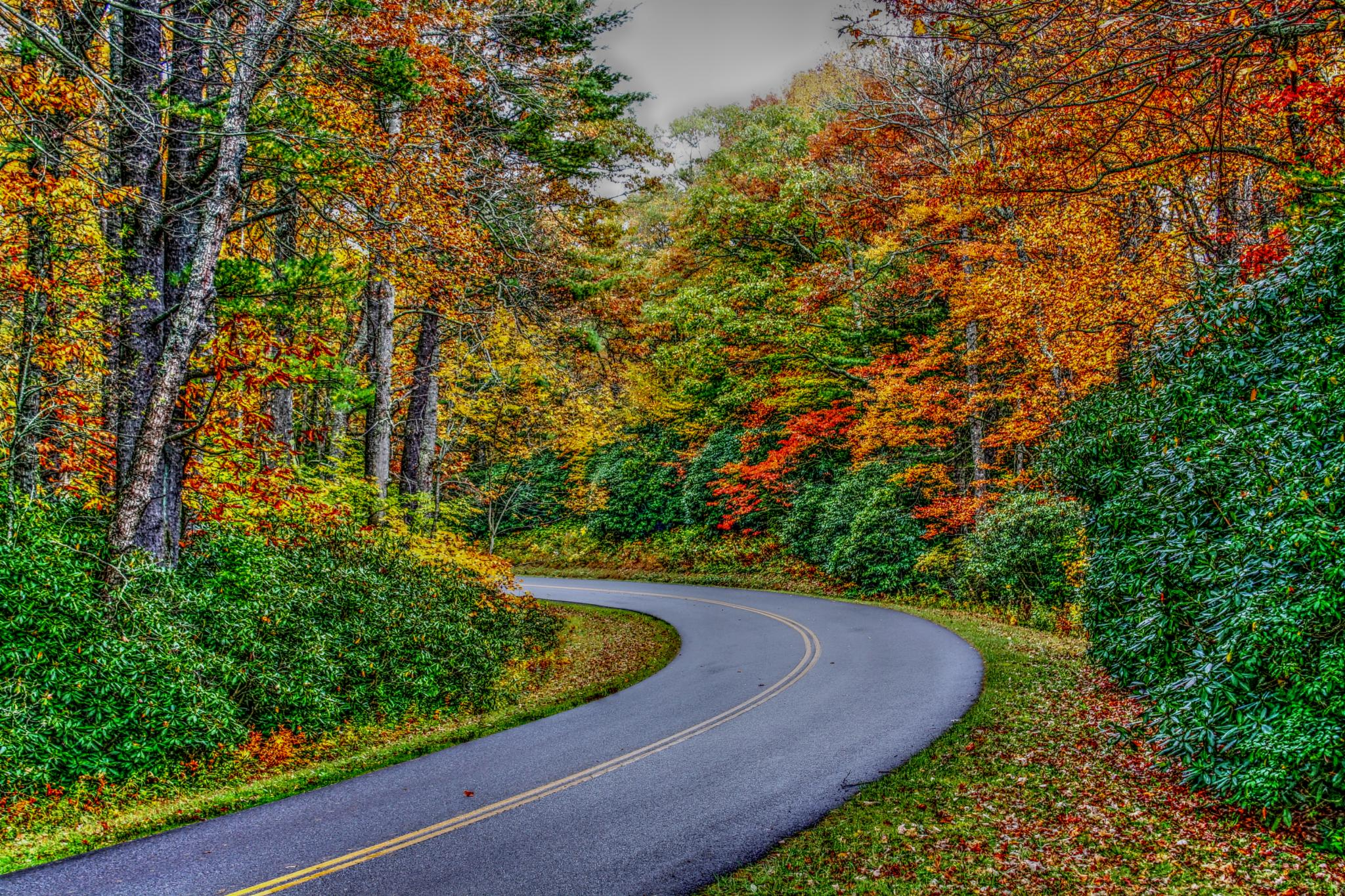 Photo in Landscape #road #fall #autumn #leaves #trees #colorful #beauty #rural