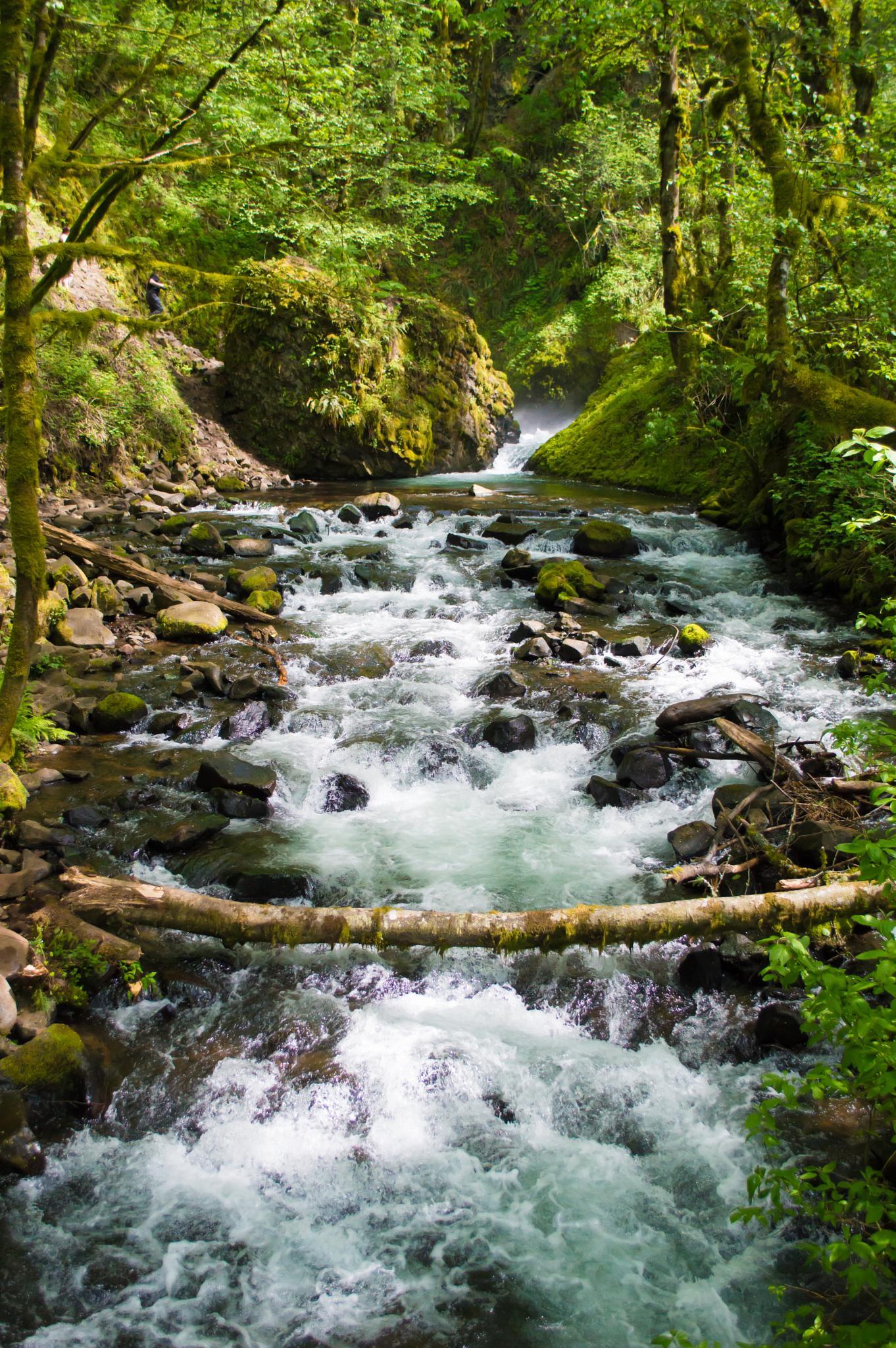 Rushing Stream by Phillip Christilaw
