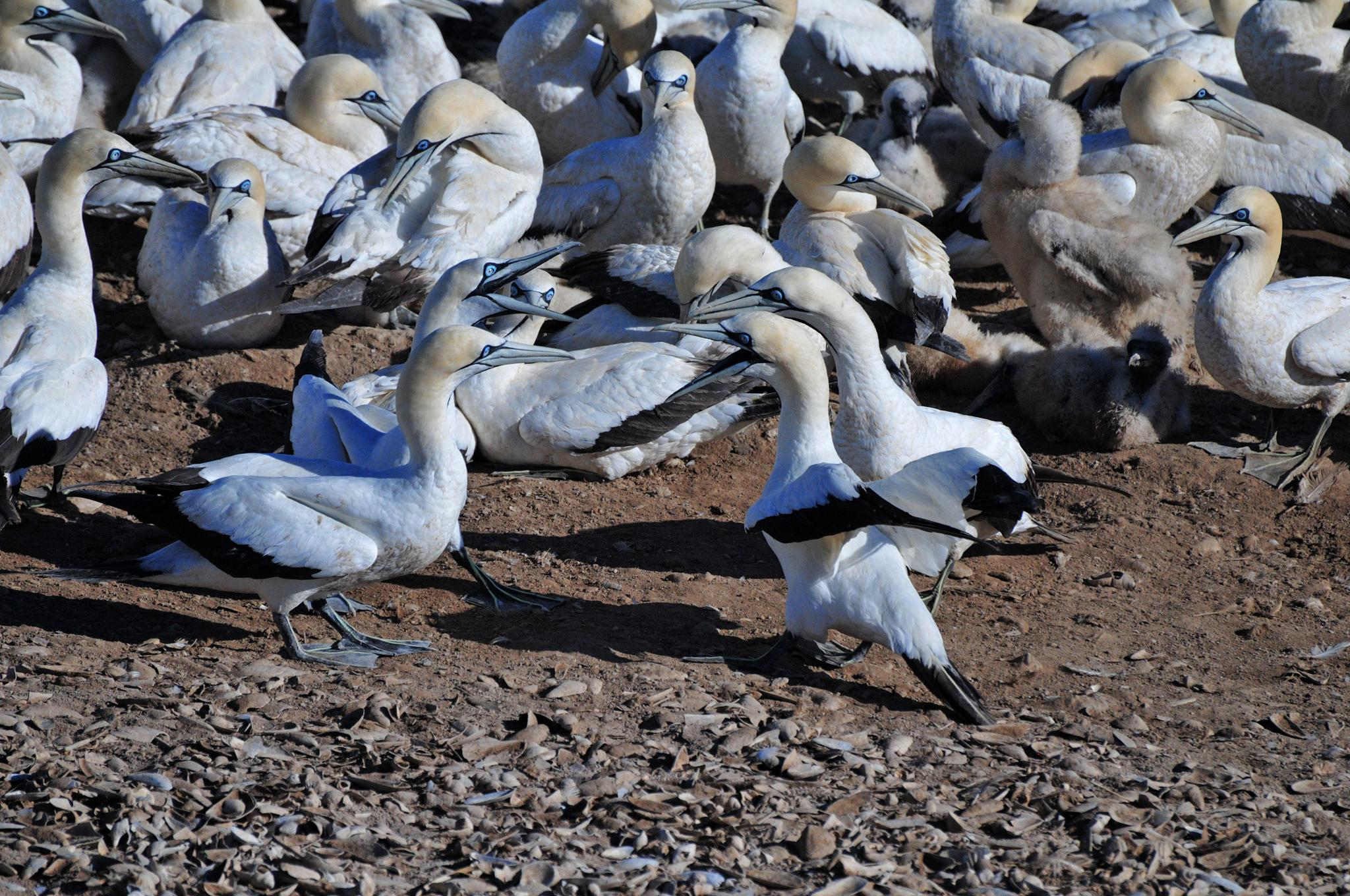 Birds by Marius