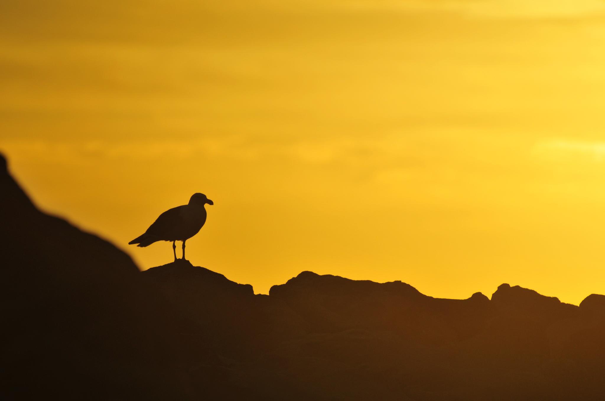 Bird Sunset by Marius