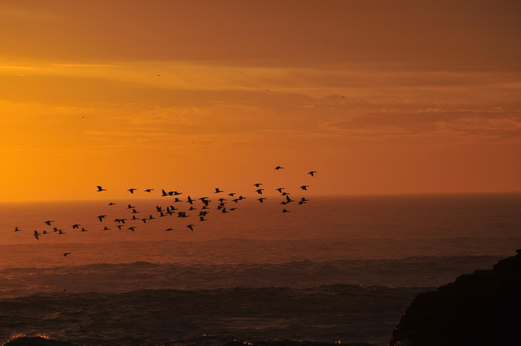 Sunset Birds by Marius
