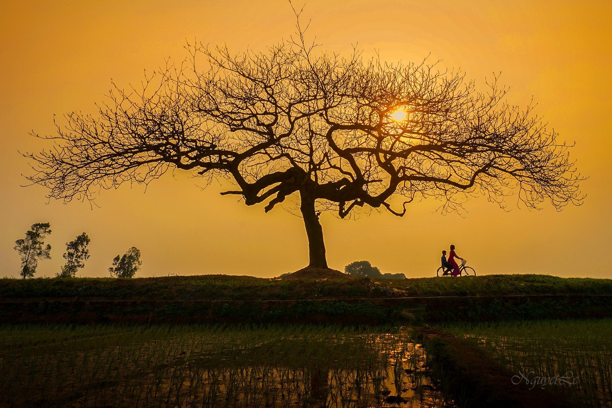 Coming home under sunset (countryside of Vietnam) by Nguyet Le
