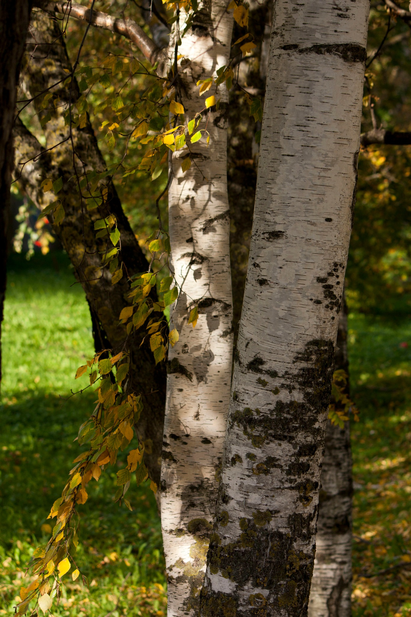 Autumn. by Svetlana Korol