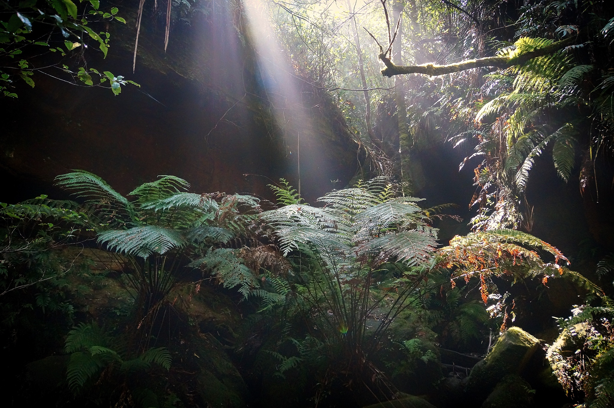 Light Rays by Peter Medbury