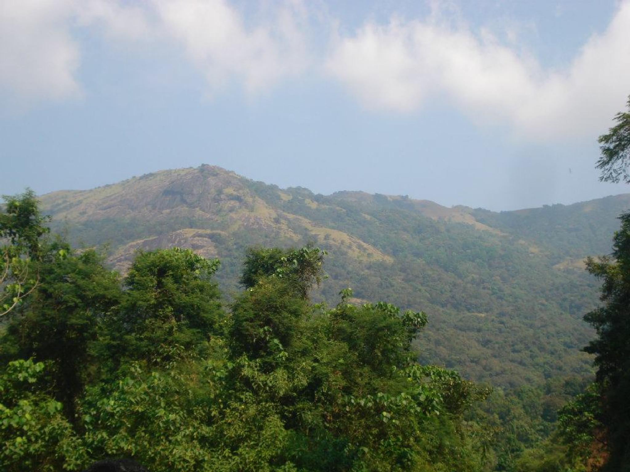 Green Hill by Ajay Kumar