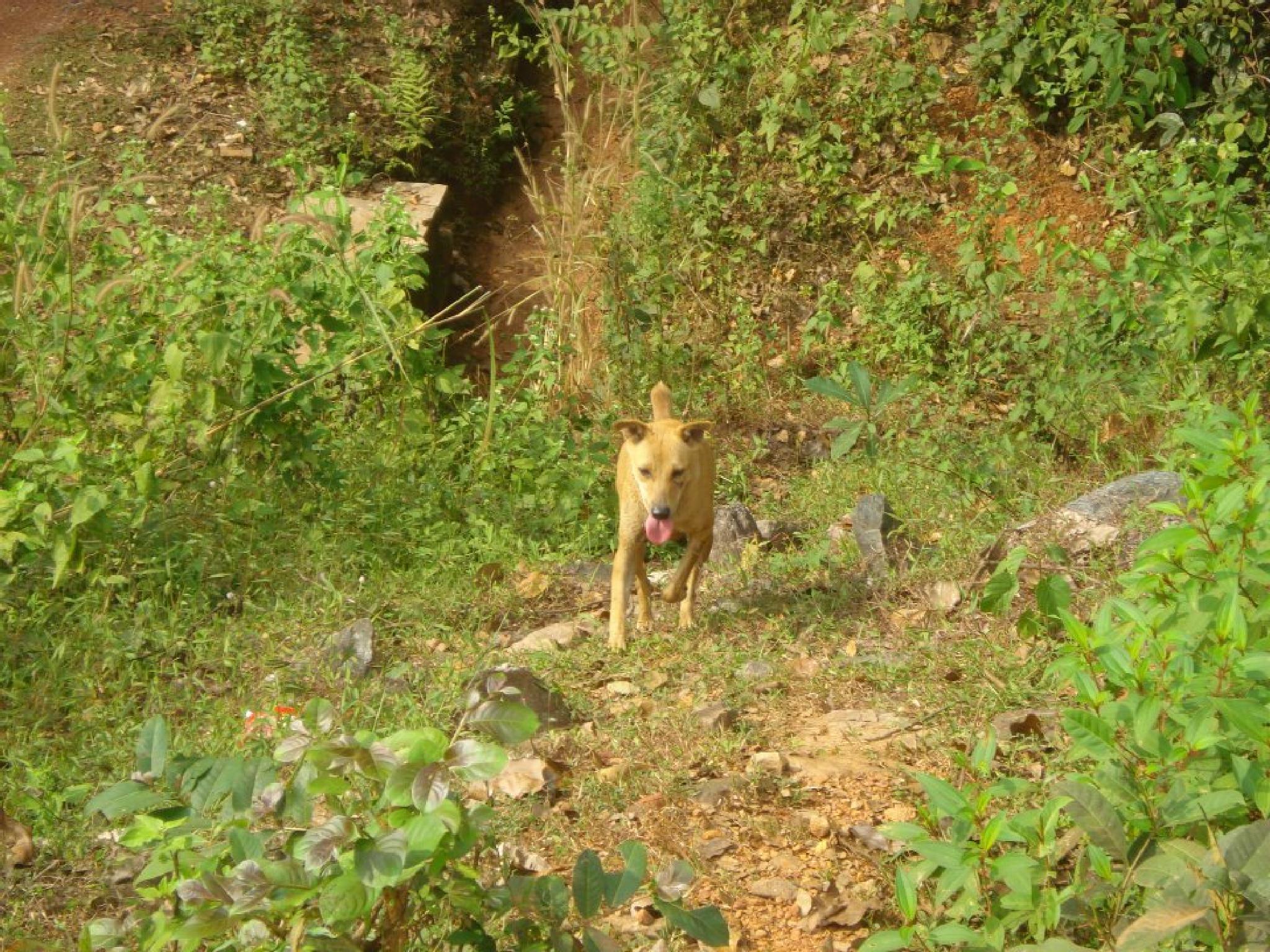 Dog by Ajay Kumar