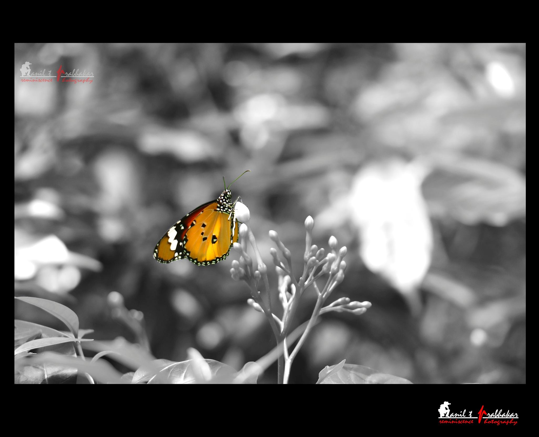 Colors by Anil T Prabhakar