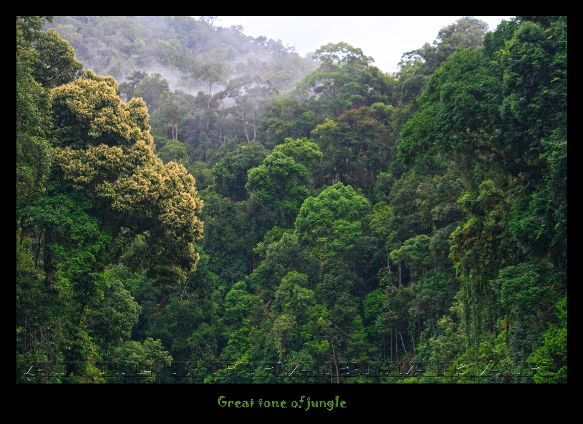 Deep Into the Forest  by Anil T Prabhakar