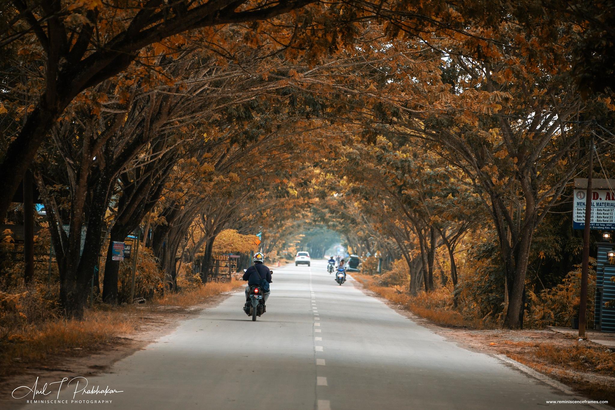 The Road  by Anil T Prabhakar