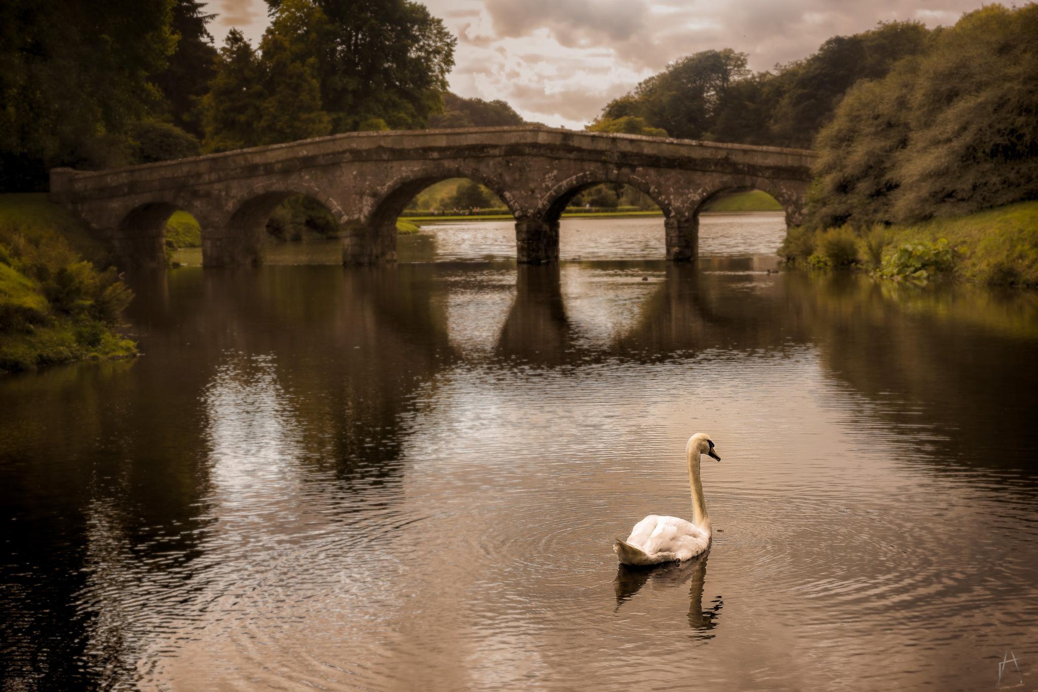 The Swan by Arek Adeoye