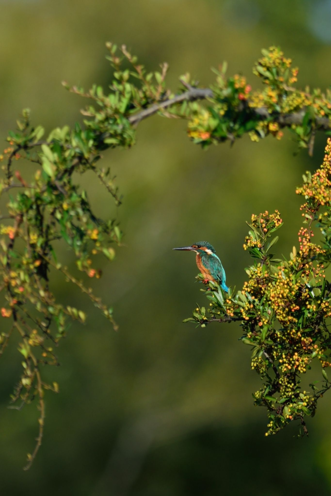 Slightly Autumn Tint , Kingfisher by Mubi.A