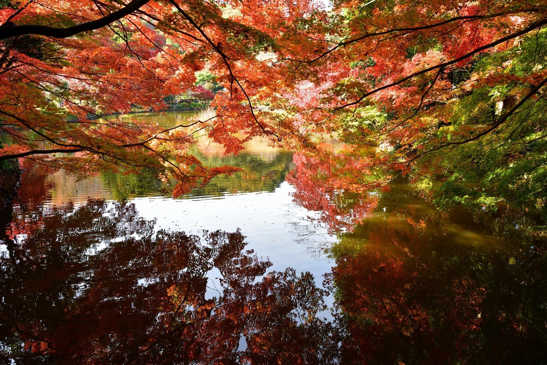 Autumn Foliage by Mubi.A