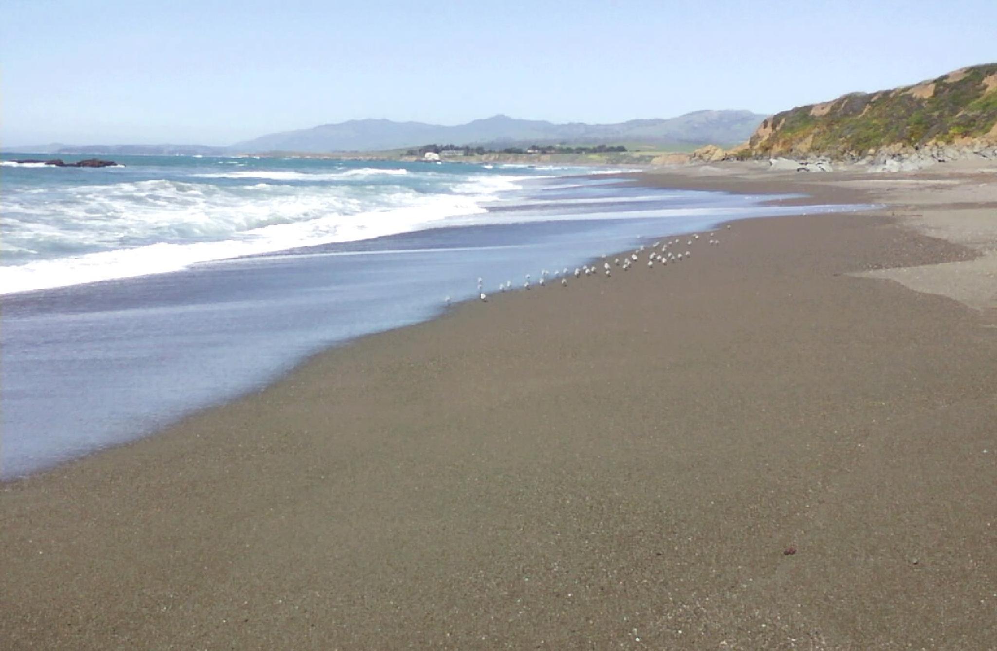 Birds on a Beach, Cambria California by Cherylina