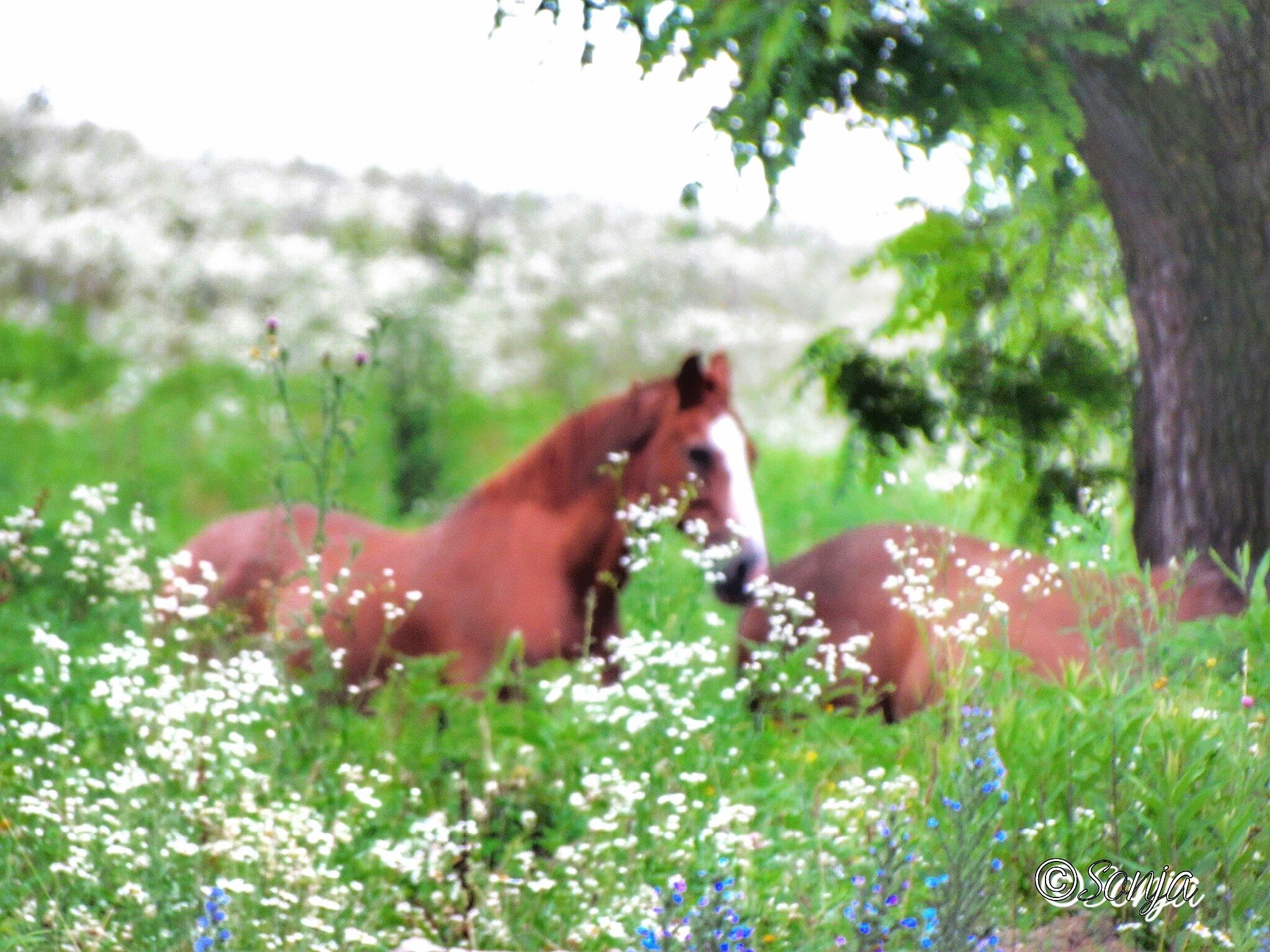 Wild Horses  by Sonja McCoy