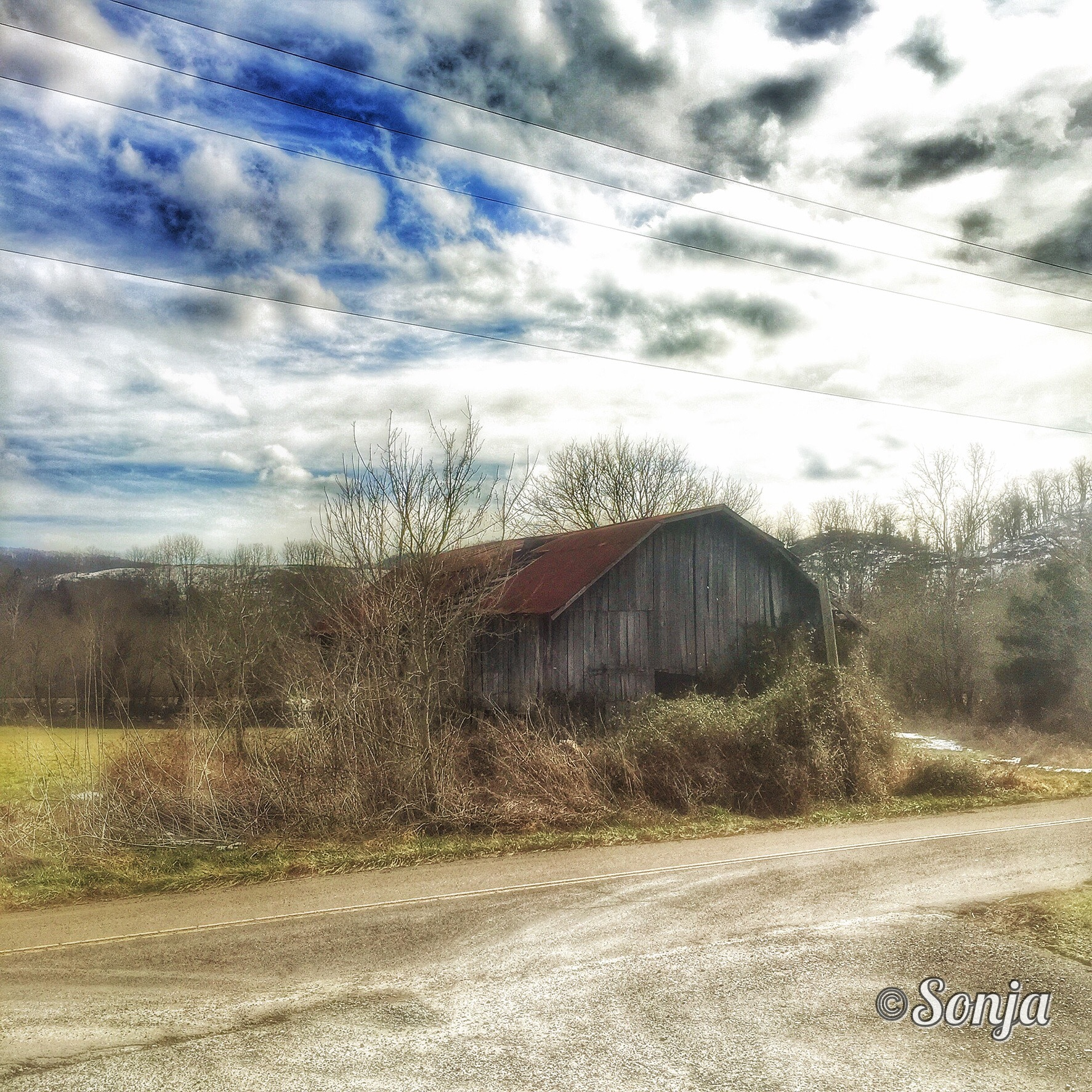 Country Life  by Sonja McCoy