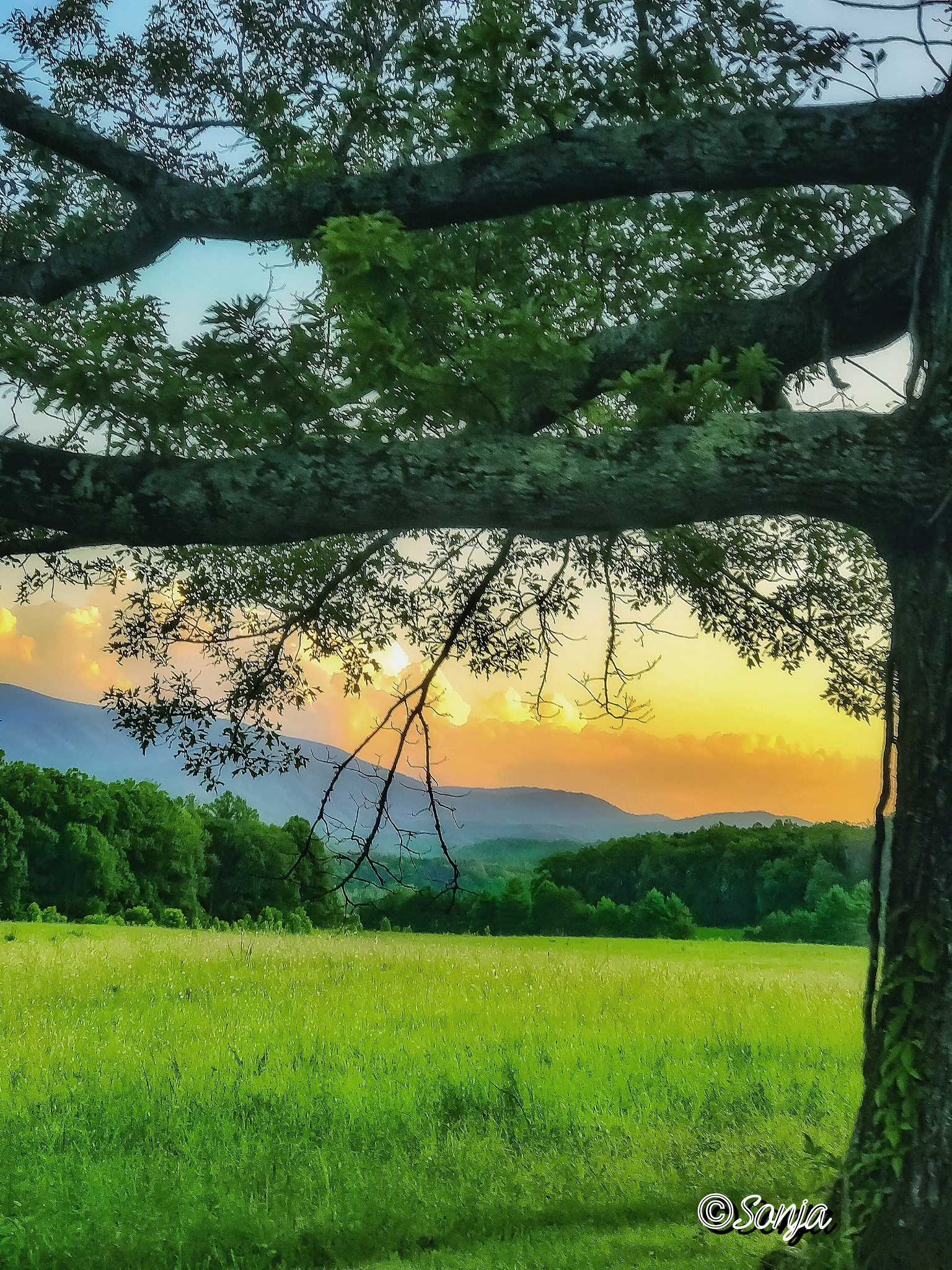 Cade's Cove  by Sonja McCoy