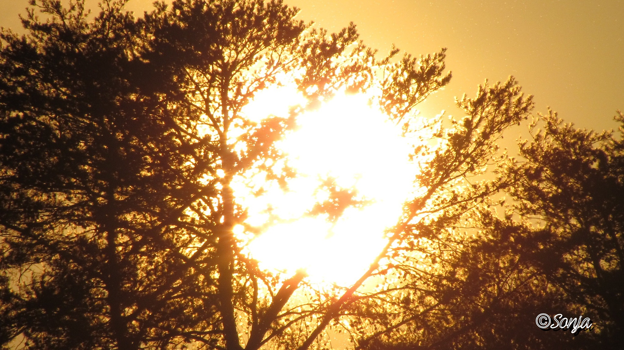 """Suns going down on """"ME"""" by Sonja McCoy"""